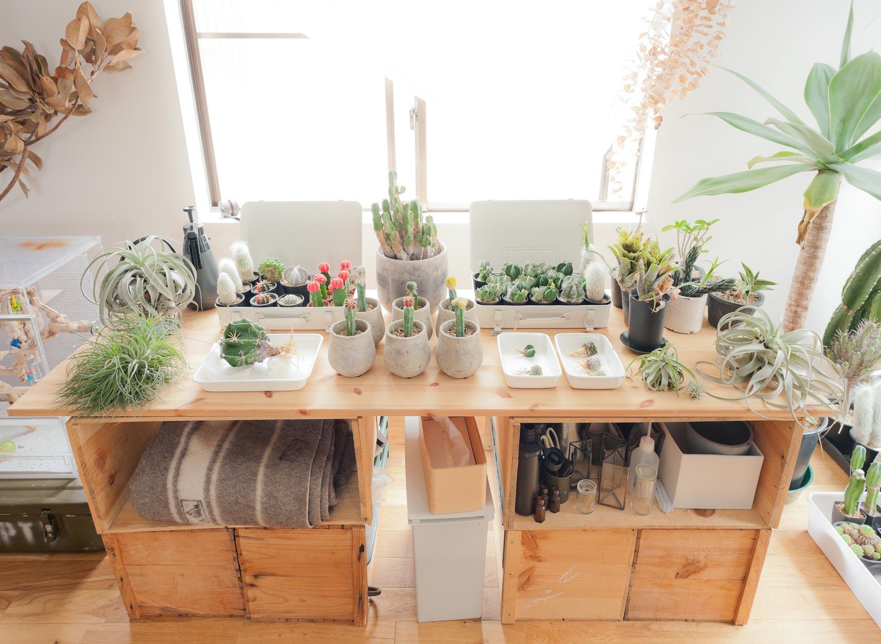 窓際にリンゴ箱を利用した台があって、その上にならべられた緑たち
