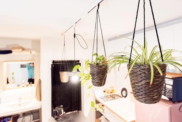 ぼくはぼくでこのグリーンを天井から吊す、っていうのを真似したいな、と思った。