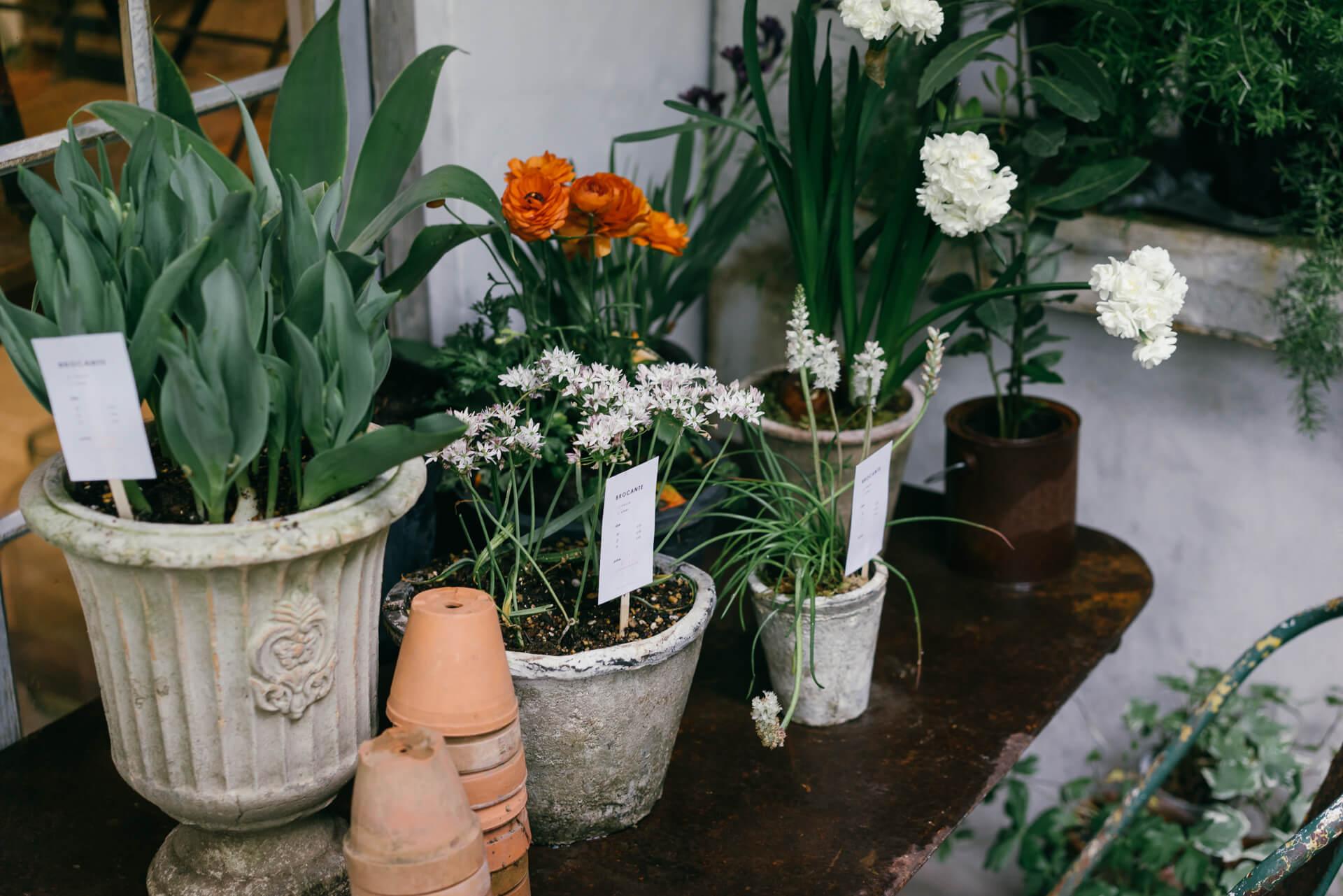 水仙やチューリップなどの植物。