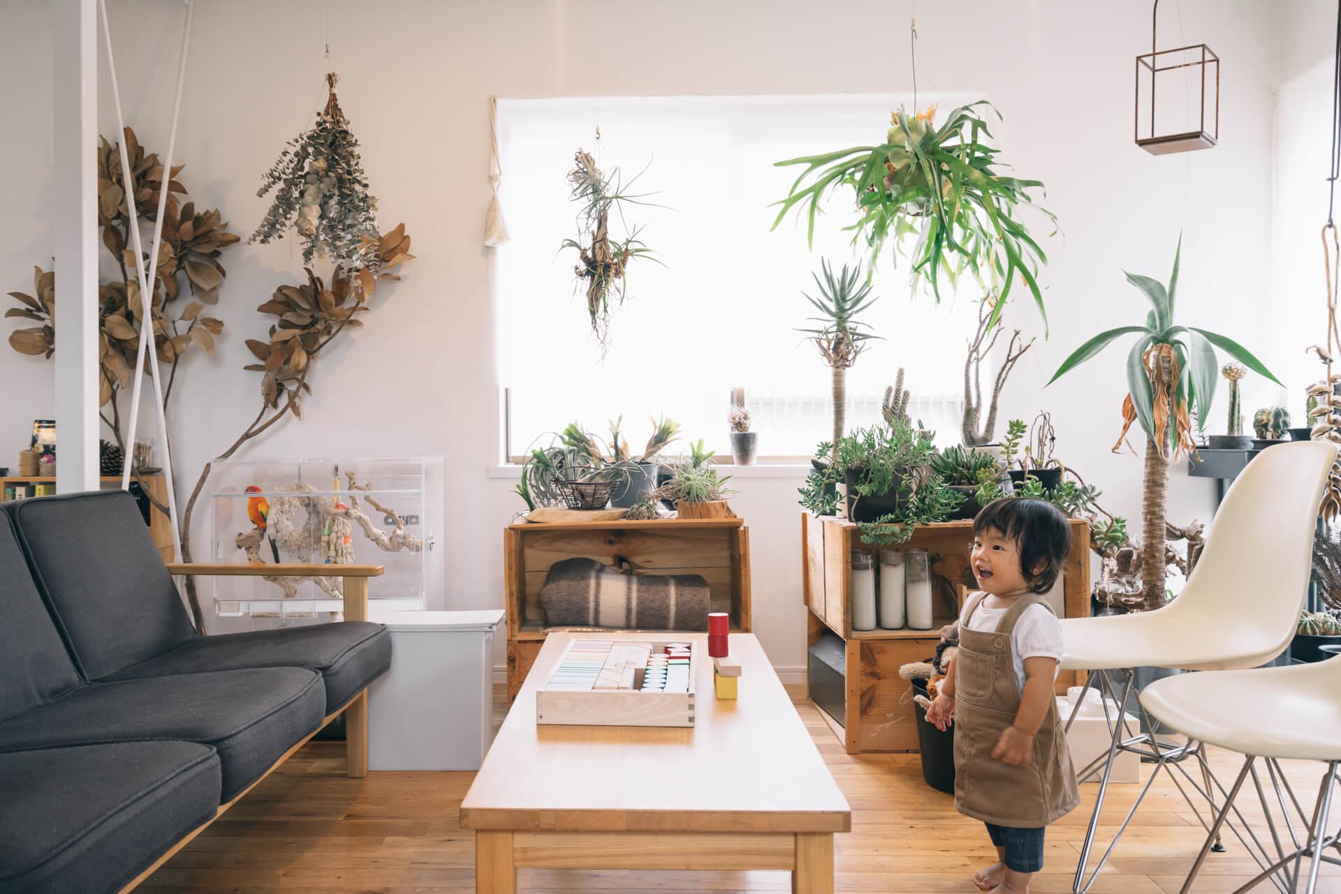 日当たりのよい特等席に、大小様々の植物が並びます