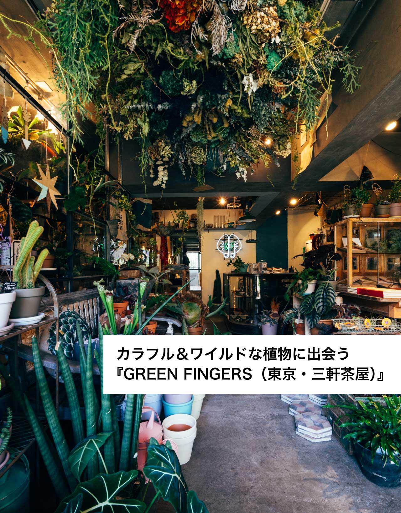 カラフル&ワイルドな植物に出会う『GREEN FINGERS(東京・三軒茶屋)』