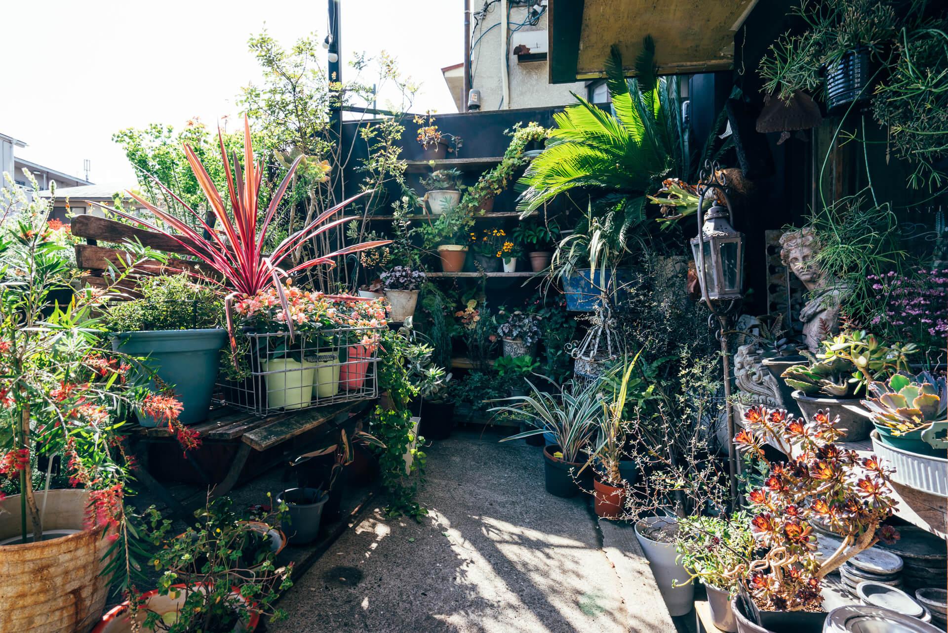 季節に応じて花の鉢植えなどが並ぶ店頭。じっくり見て回ると変わった植物や不思議な形のものに次々出会い、時間を忘れます。