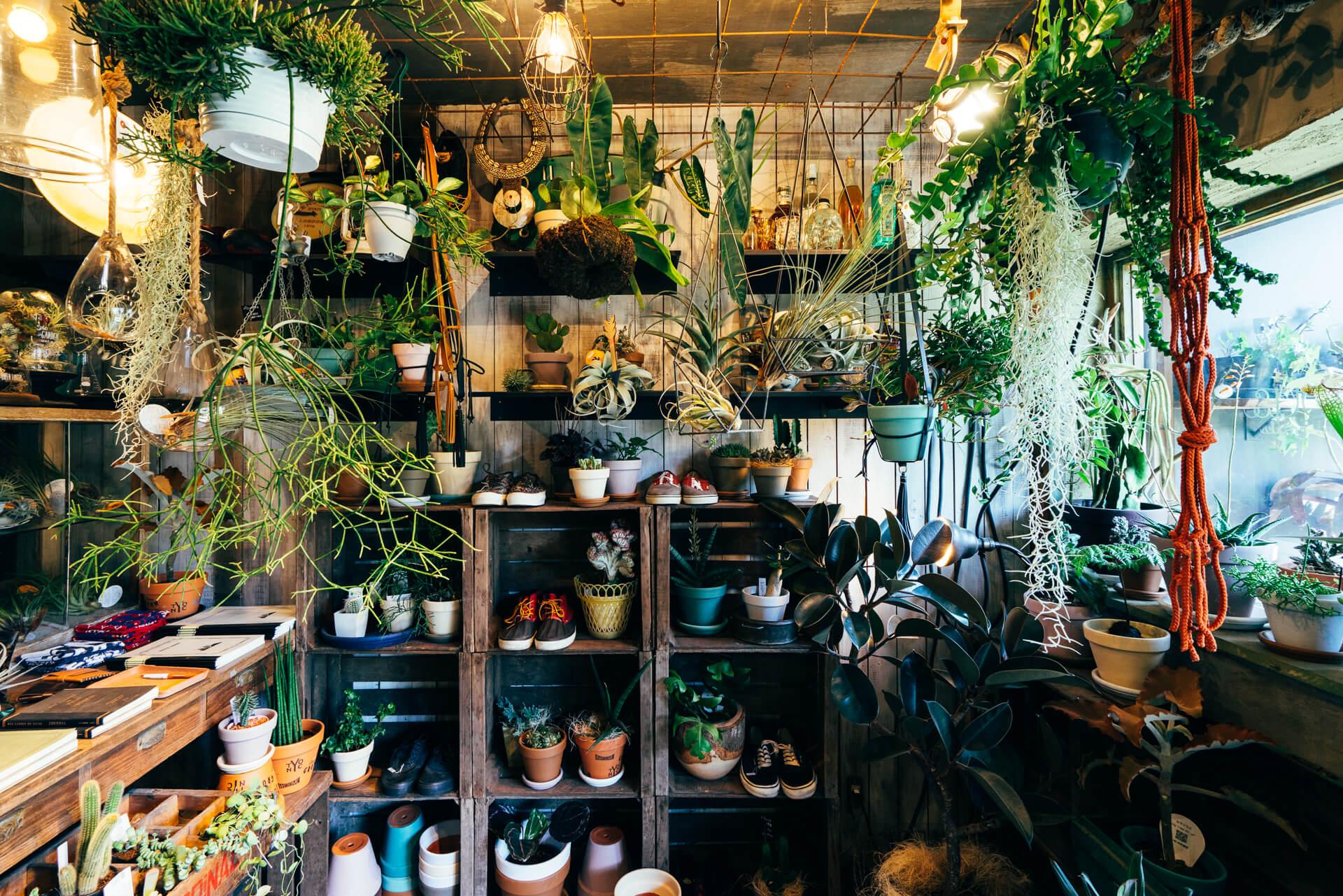 古材のウッドボックスやヴィンテージ家具などの什器に、植物、植木鉢、文房具から靴や古着まで、独自のセンスでセレクトされたアイテムがいっぱいに並びます。