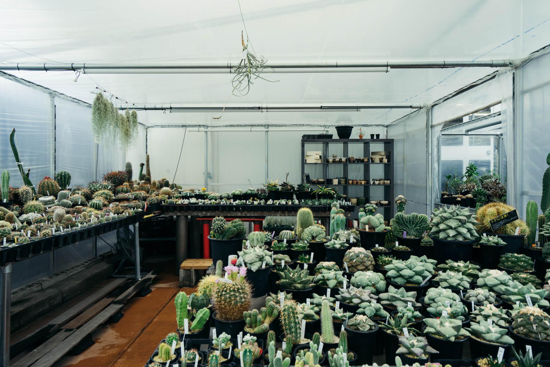 温室の中には、数百円のものから、数万円のマニア向けのものまで、掘り出し物を探しに通う方も多いサボテンコーナー。