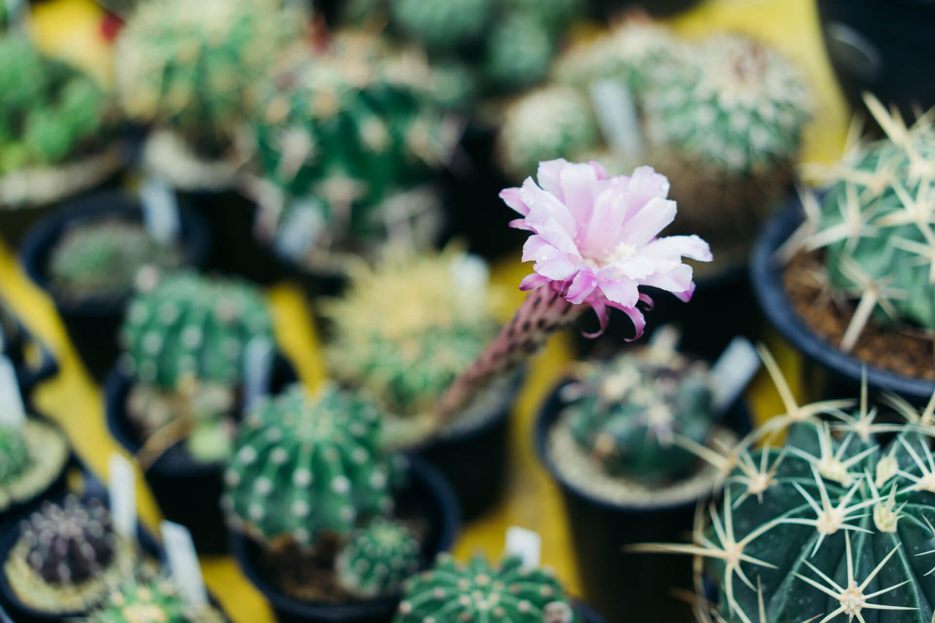 花の形も様々で、どんな花が咲くのかワクワク待つ楽しみもあります。