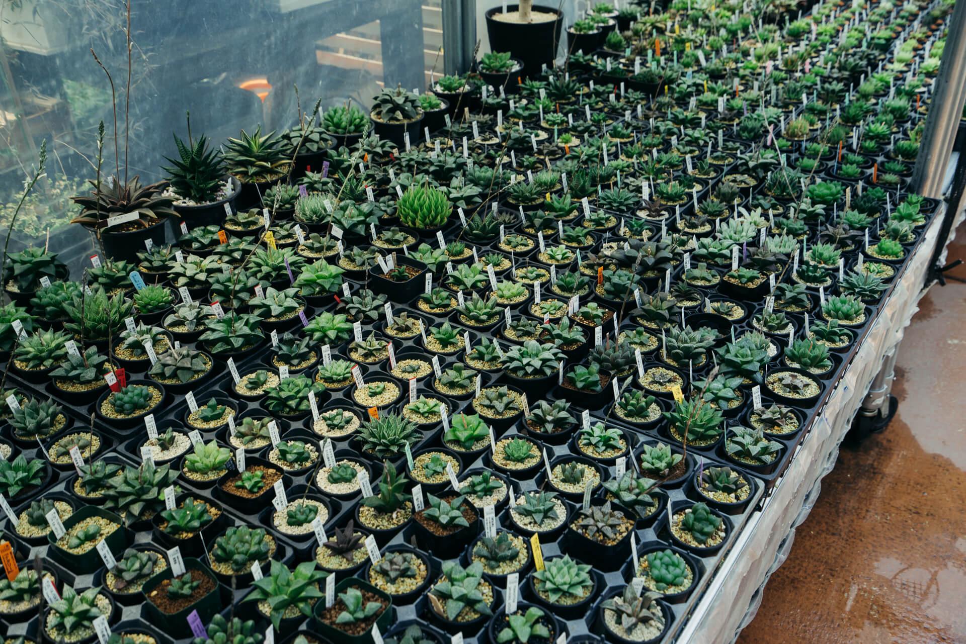 店頭には、たくさんの種類の多肉植物がずらり。