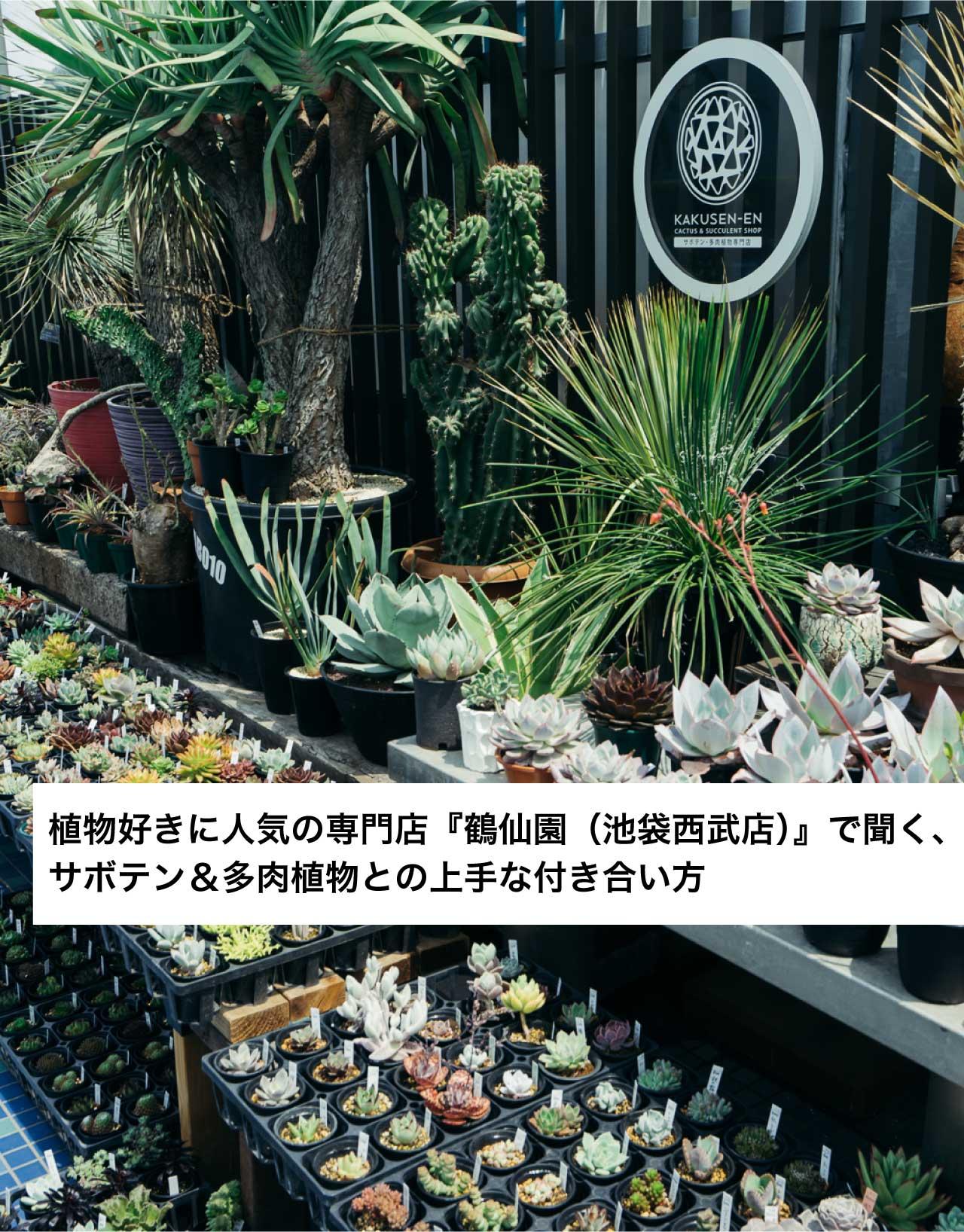 植物好きに人気の専門店『鶴仙園(池袋西武店)』で聞く、 サボテン&多肉植物との上手な付き合い方