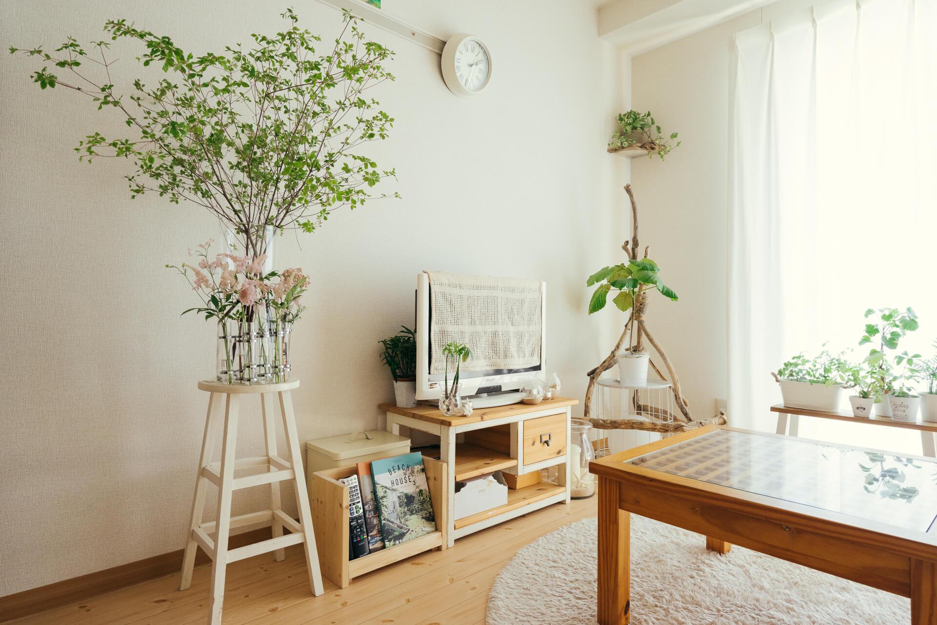 ワンルームでグリーン&マリンスタイルを楽しむ sakiyuka さんの部屋