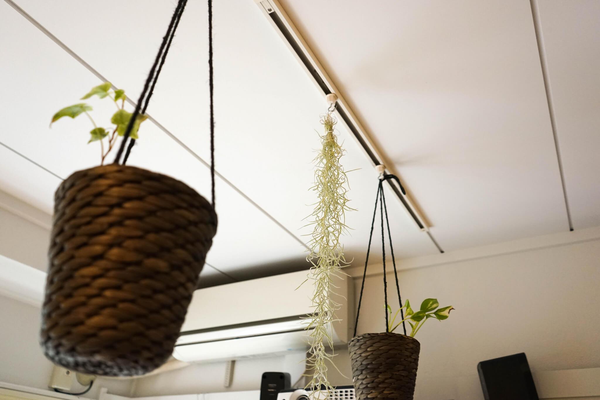 こんな風に、専用のフックを使って植物を吊るして楽しむこともできます。