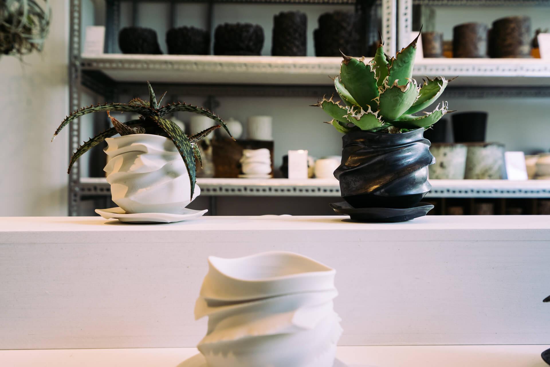 こちらは陶芸作家 池田麻人さんによる新作「Ryumyaku(龍脈)」シリーズ。波打つような独特の形が植物を引き立てます。(POT 6,000円、POT+PLANTS 12,000円前後/左:アロエ・ソマリエンシス、右:アガベ・チタノタ)