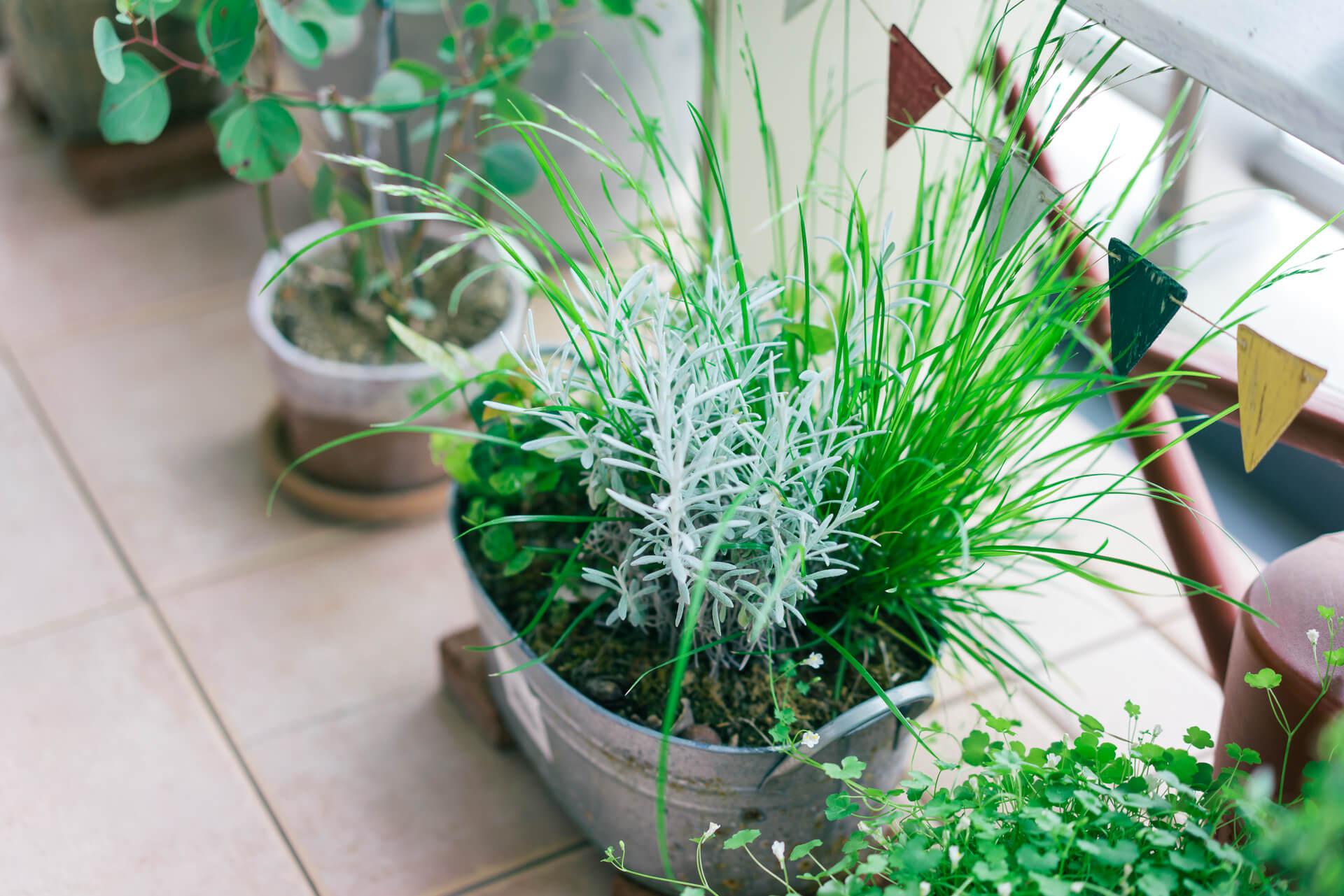 冬もさみしくならないように、1年中グリーンでいてくれるものが好き。ホームセンターで買ってきた植物で作った寄せ植えも素敵です。