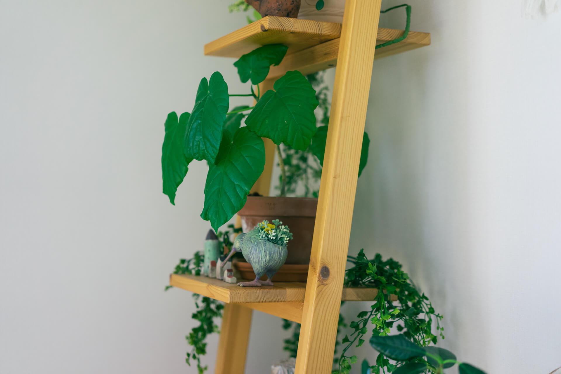 挿し木で増やした小さな株もすくすく成長中。