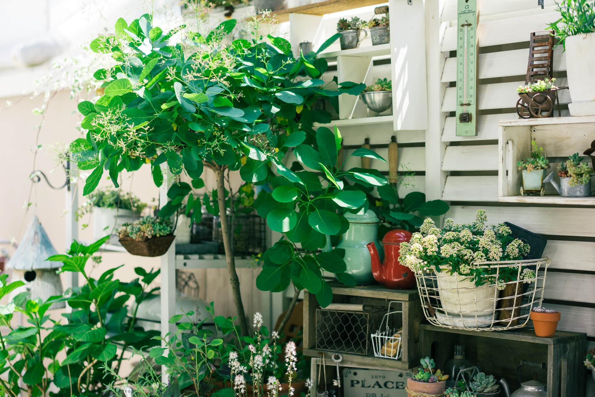 「何よりも、バランスが大事」とkokkomachaさん。冬も寂しくならないよう、お花や雑貨に混ざって常緑樹もところどころに配置。リースにもできるユーカリポポラスや、スモークツリーがお気に入り。