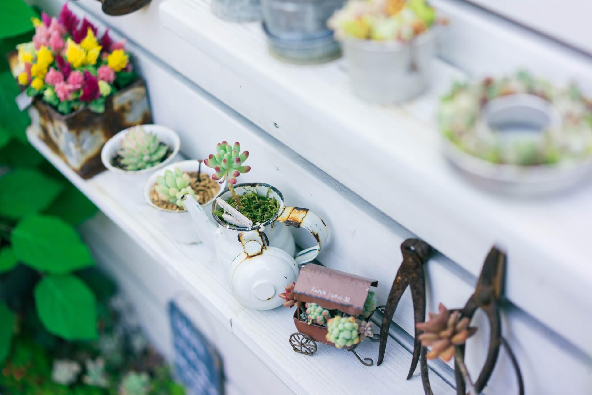 紅茶の缶や、ホーローの食器などにも穴をあけて多肉を植えます。小さな雑貨の中に植えると、まるでミニチュアの森林みたいな雰囲気。