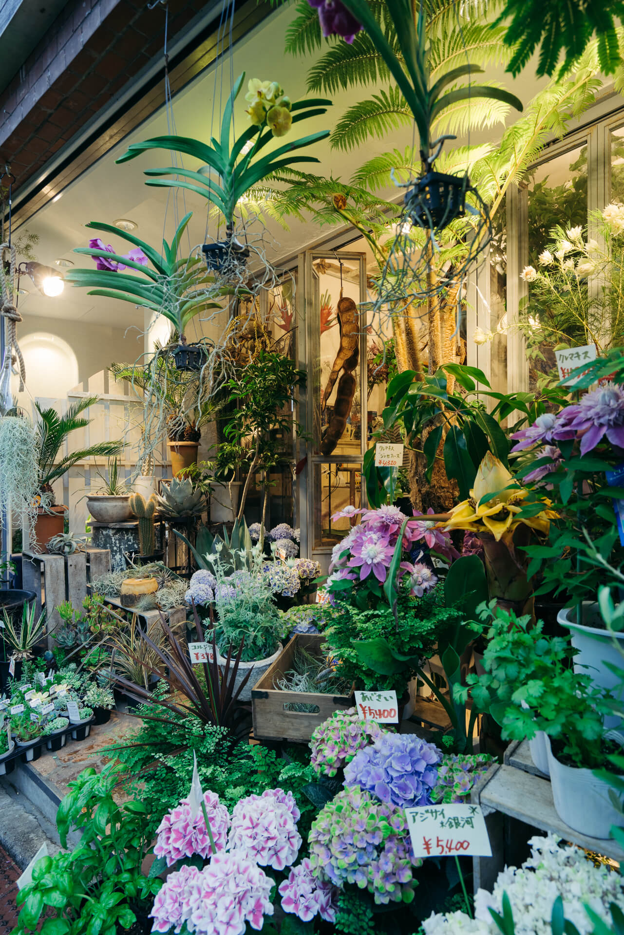 店頭には、鉢もののお花やハーブ、多肉植物などのほかに、エアプランツ、着生ランなど、ちょっと珍しい種類のものも少しずつ置かれていました。