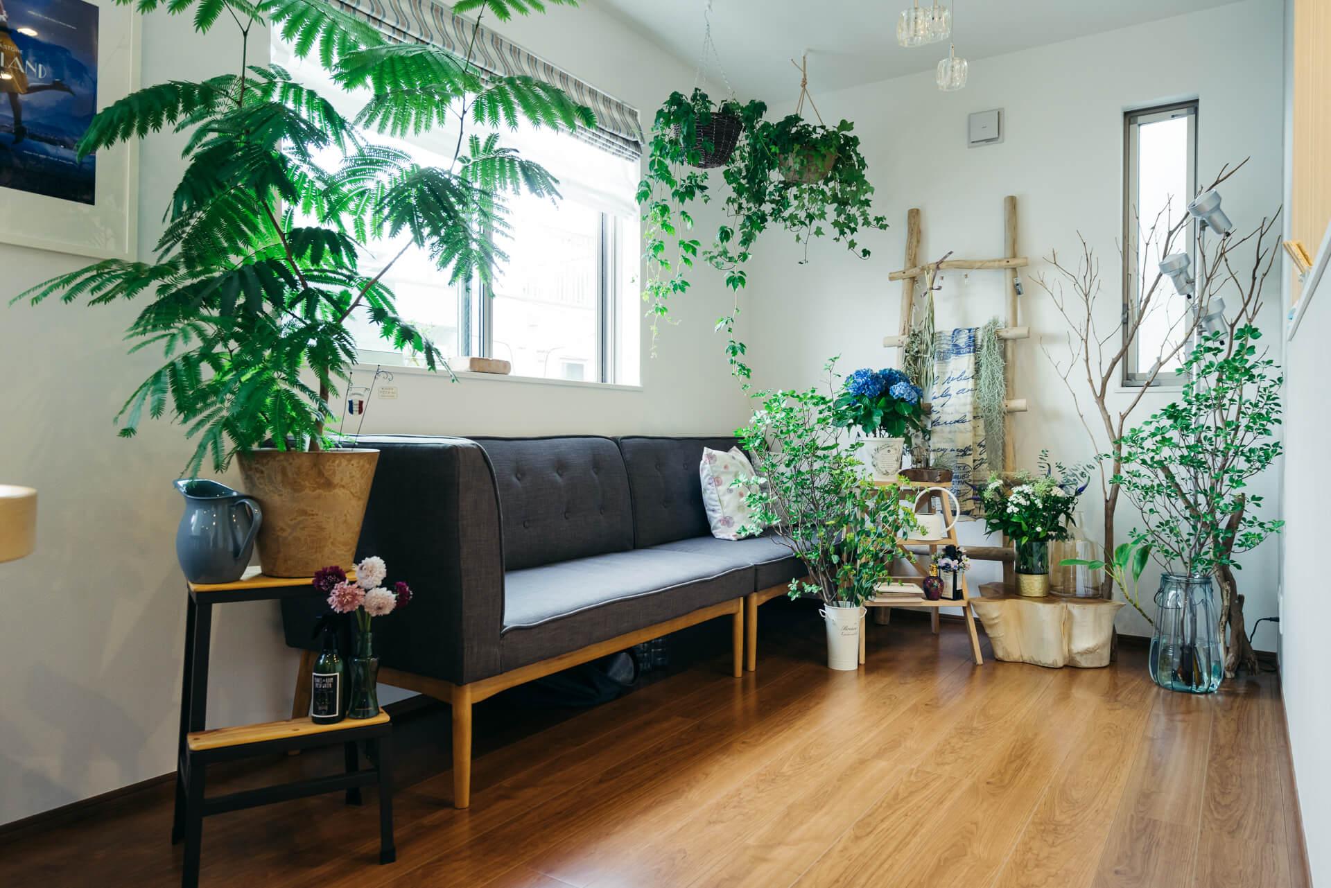 たくさんのグリーンに囲まれたソファ。ソファ横のエバーフレッシュは何度も植え替えをしてこのサイズまで大きくなりました。