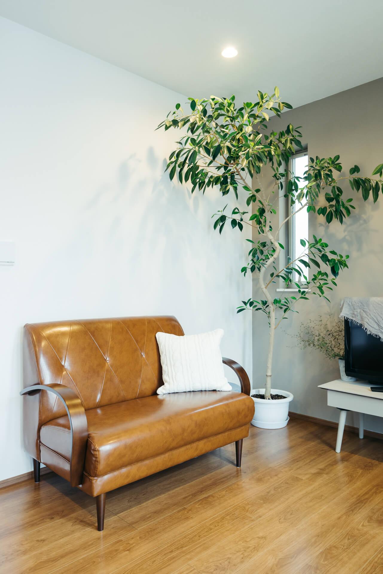 見事なガジュマルの木も、ワールドガーデンで購入。「室内は乾燥しやすいので、冬もたっぷりお水をやってください」とアドバイスをもらい、元気を回復できたそう。