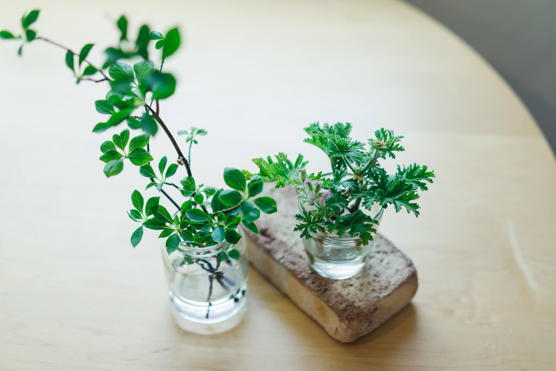 ブーケに入っていた小さなグリーンも、水に挿して大きく育てます。