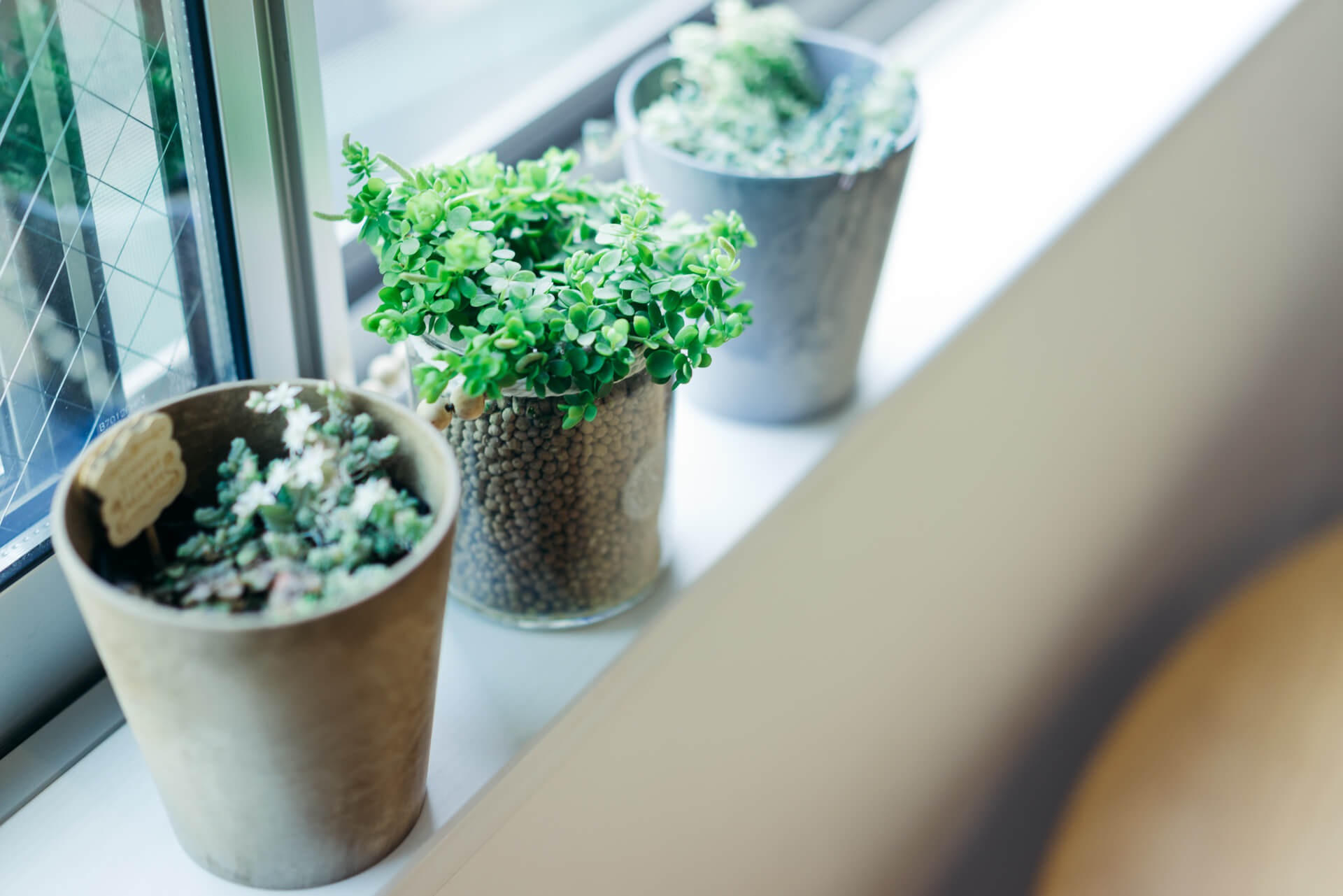 一番光のあたる場所には、わさわさ元気に育つアイビーと、毎年お花を咲かせるという多肉植物たち。
