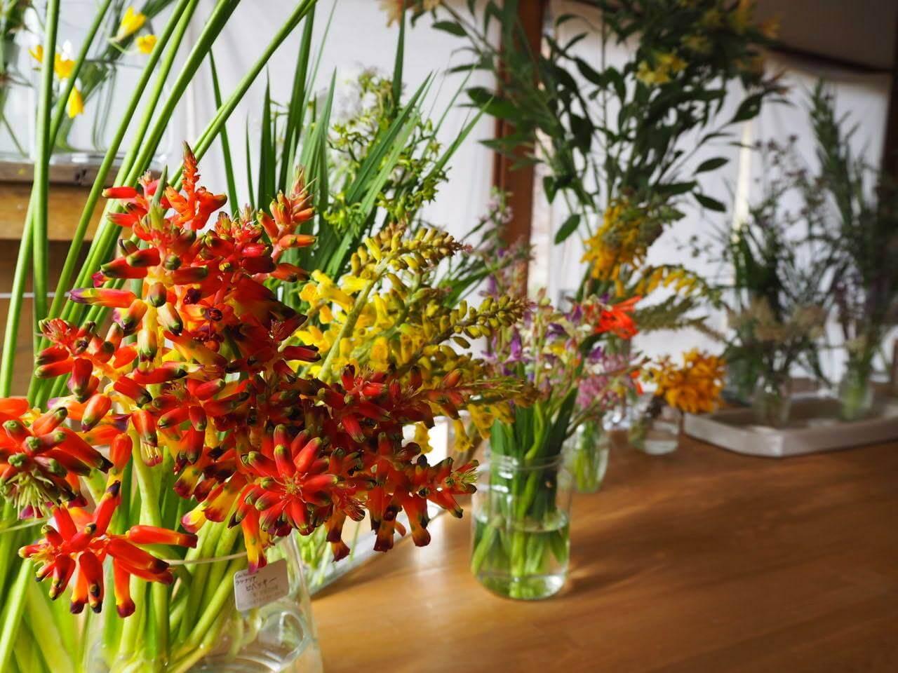 先日特集されていたのは、おすすめの三宅花卉園さんのお花たち。有機栽培で作られたお花で、ガラス細工のように透明感のある、繊細さと力強さを併せ持つフォルムが素敵です。