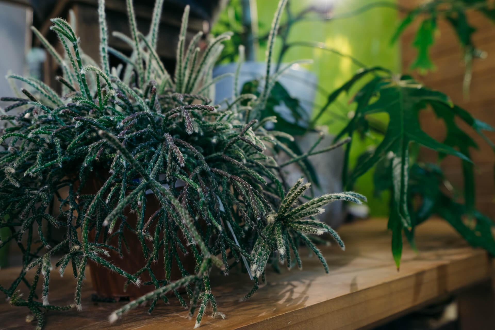 よく見かける種類の植物も、かなり大きなものがたくさんそろっているのに気がつきます。