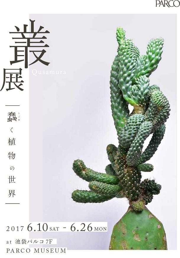 生き生きと、「いい顔してる」植物を探しに。『叢 – Qusamura 展 ~蠢く植物の世界~』(池袋パルコ)
