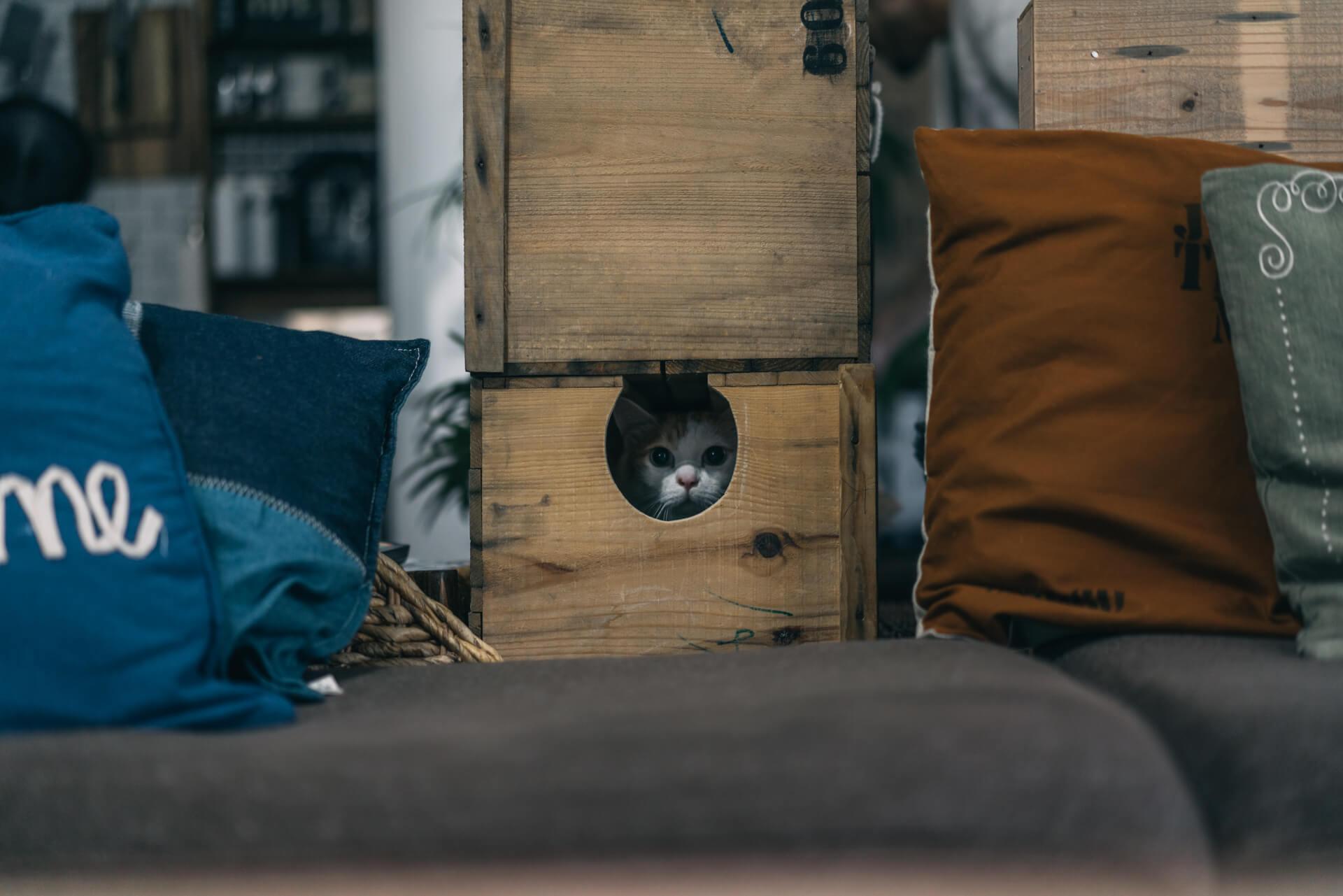 振り返ると、りんご箱にあけられた穴からもう1匹、三毛猫のdaoさんが見つめます。