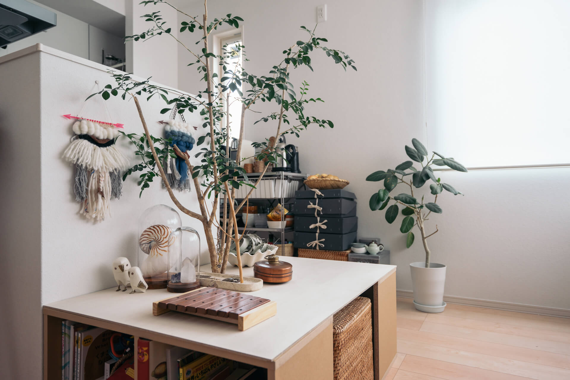 シルクジャスミンの樹は、Katsuraさんのお部屋のシンボル。