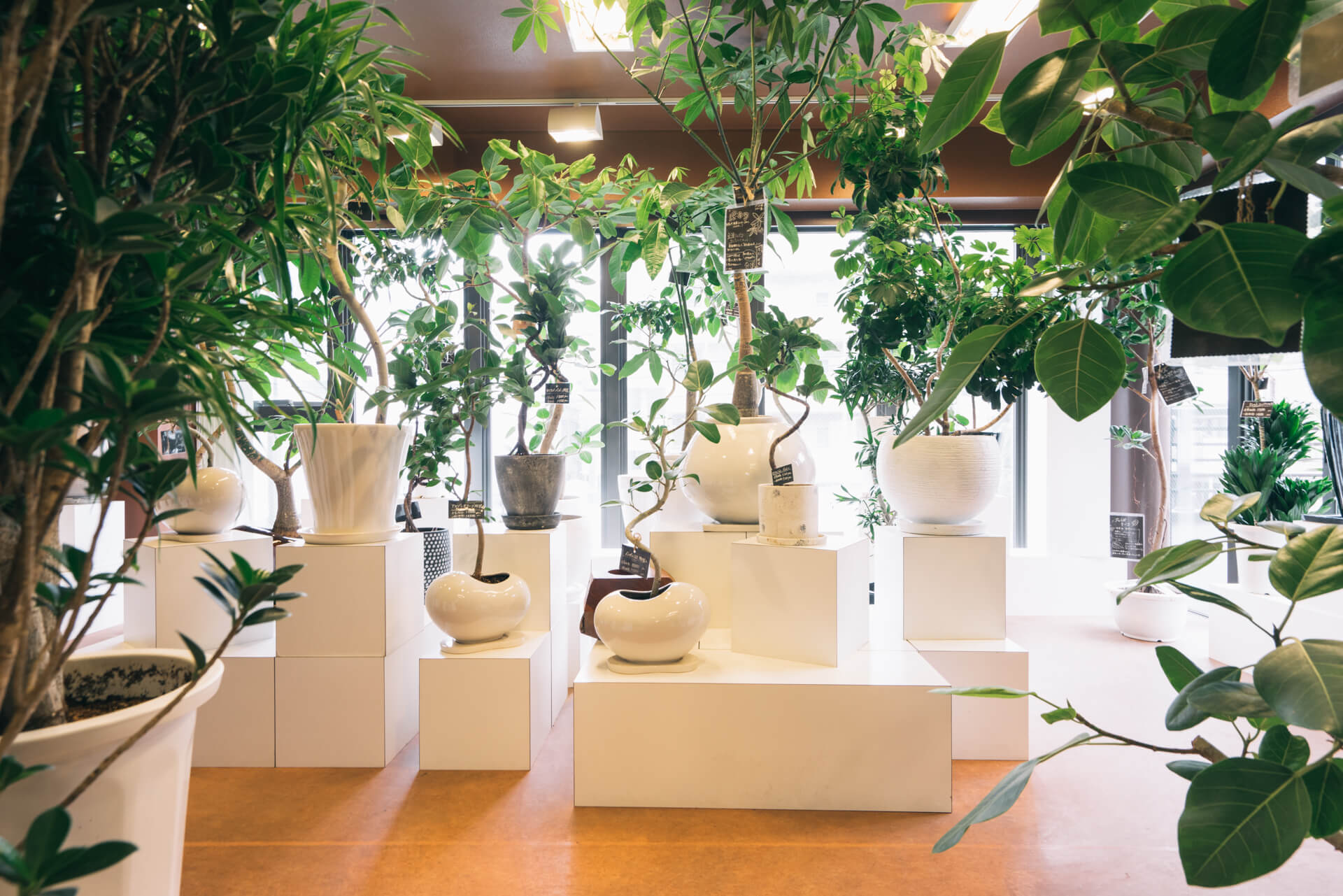 2階には、中型の植物と、陶器鉢に植え込まれたものも。