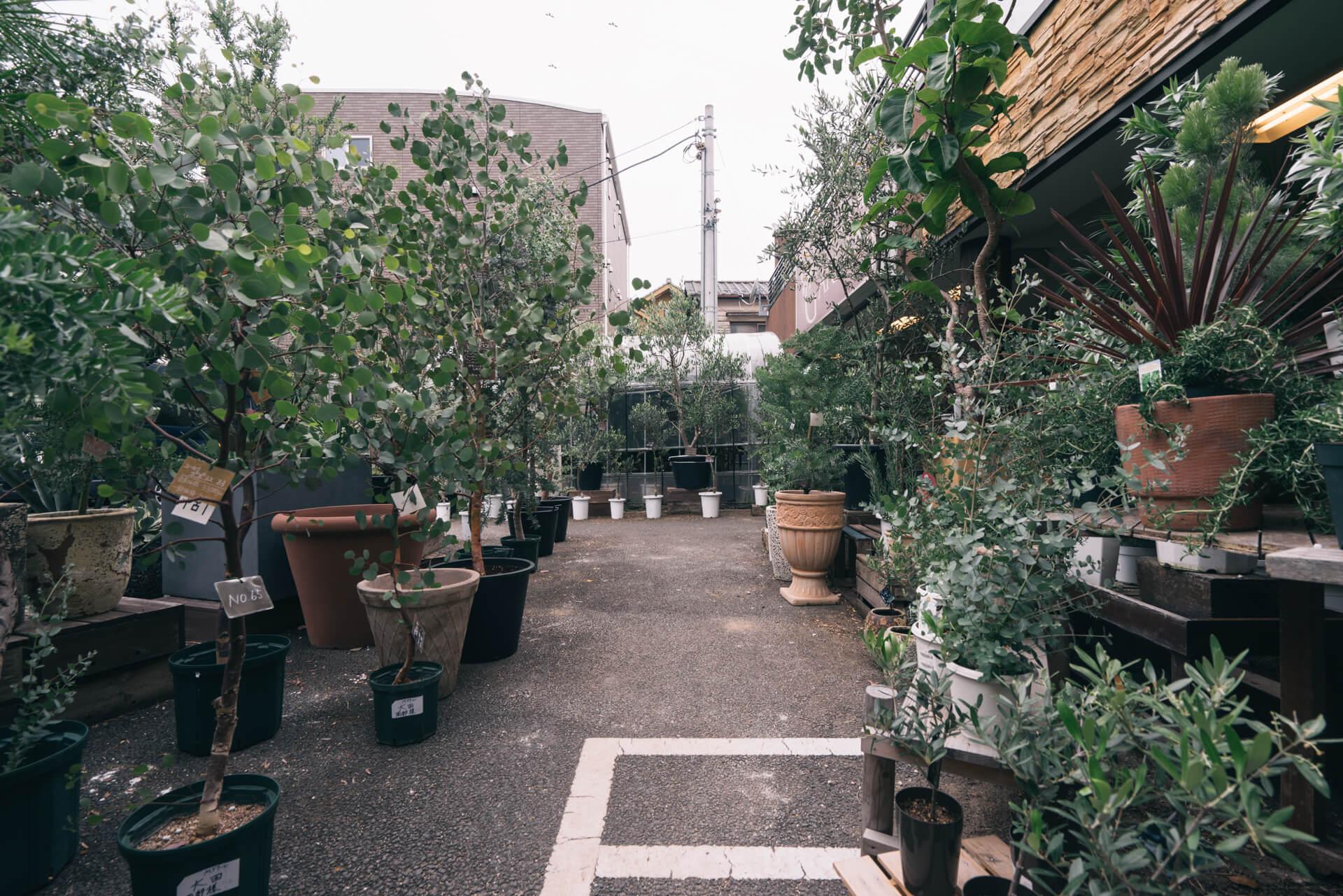 屋外には、ユーカリやオリーブなど、庭やベランダ用の植物もたくさん揃います。