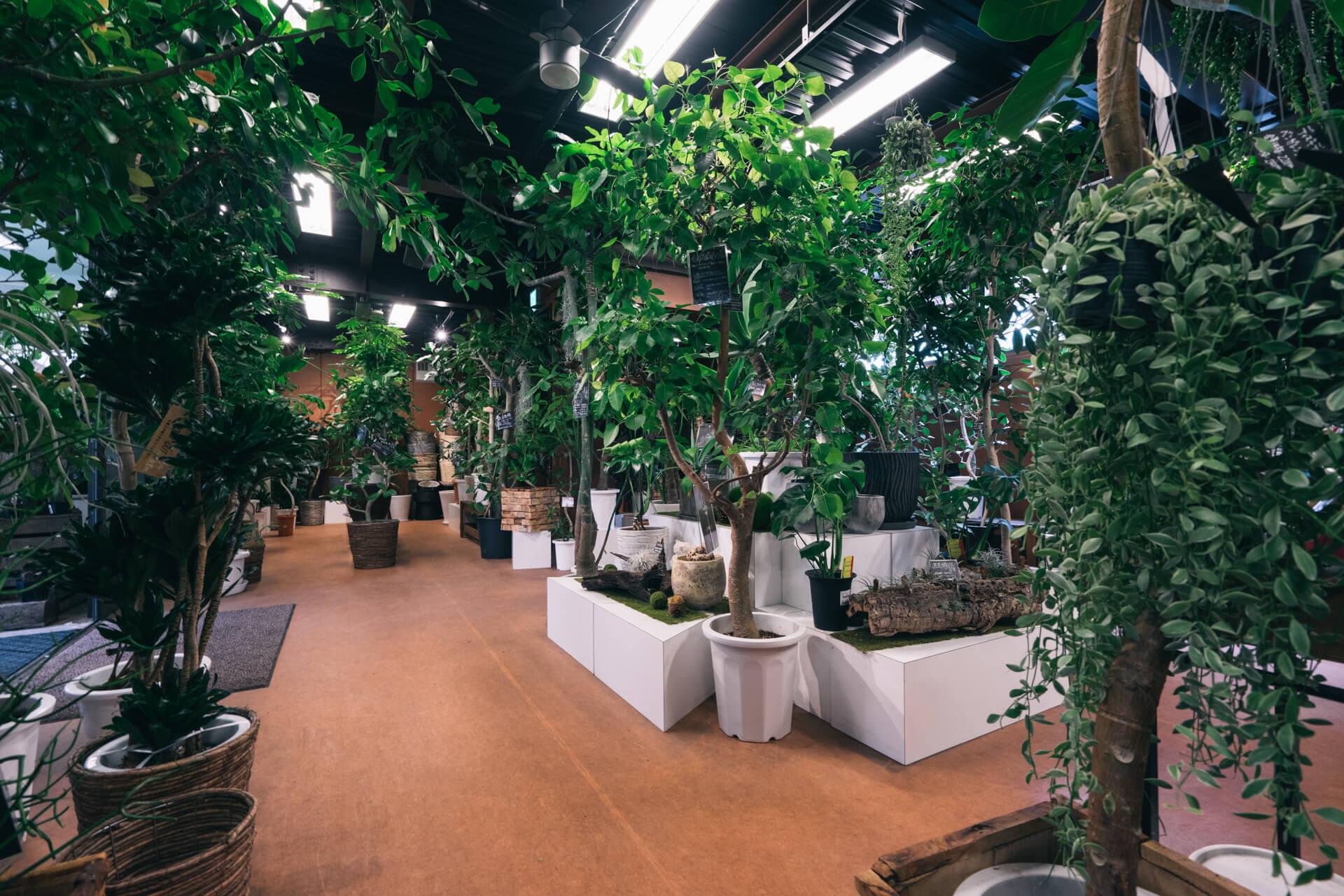 1階は主に10号サイズ以上の大型植物がずらりと並ぶ、迫力ある空間。