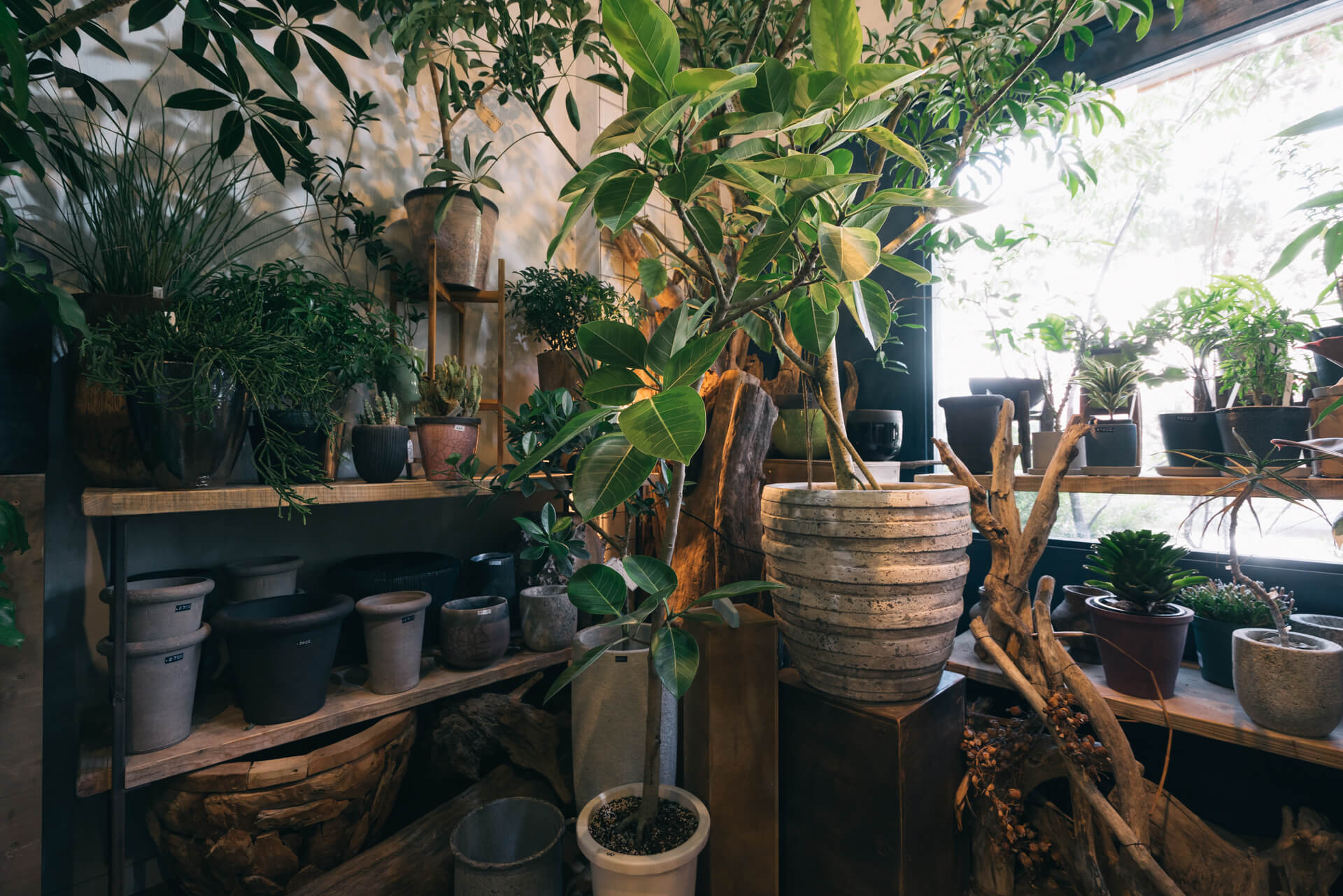 大きな枝モノや、鉢植え、植木鉢などのアイテムがバランスよく並びます。
