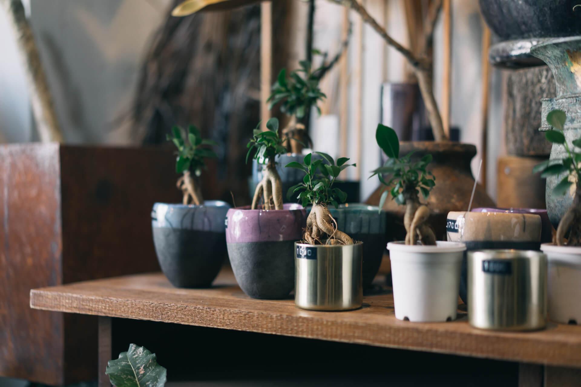 鉢植えも、雰囲気のある植物がひとつひとつそれに合わせた鉢に植えられています。