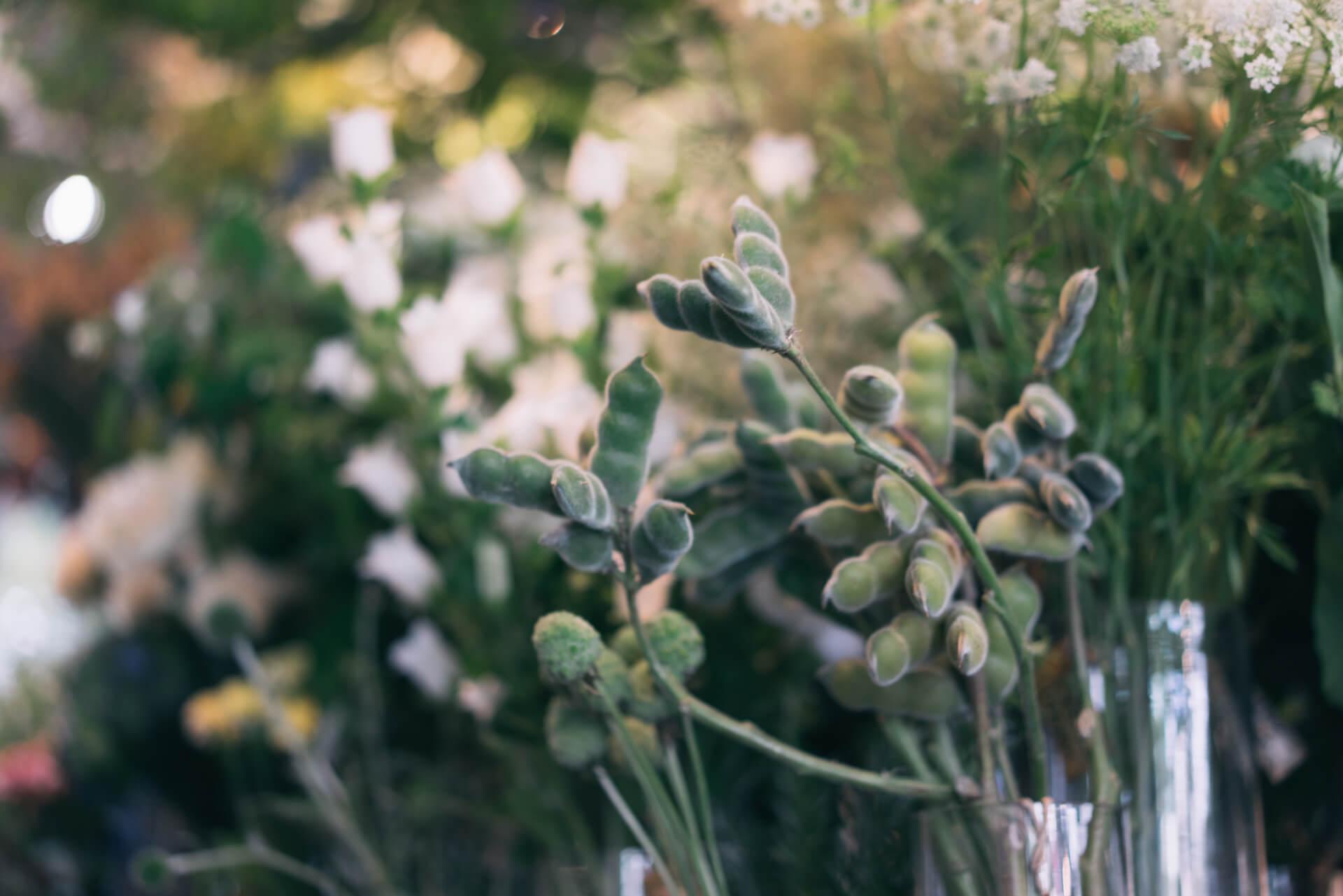 生花のなかにも、かわいいものが。これは……枝豆?