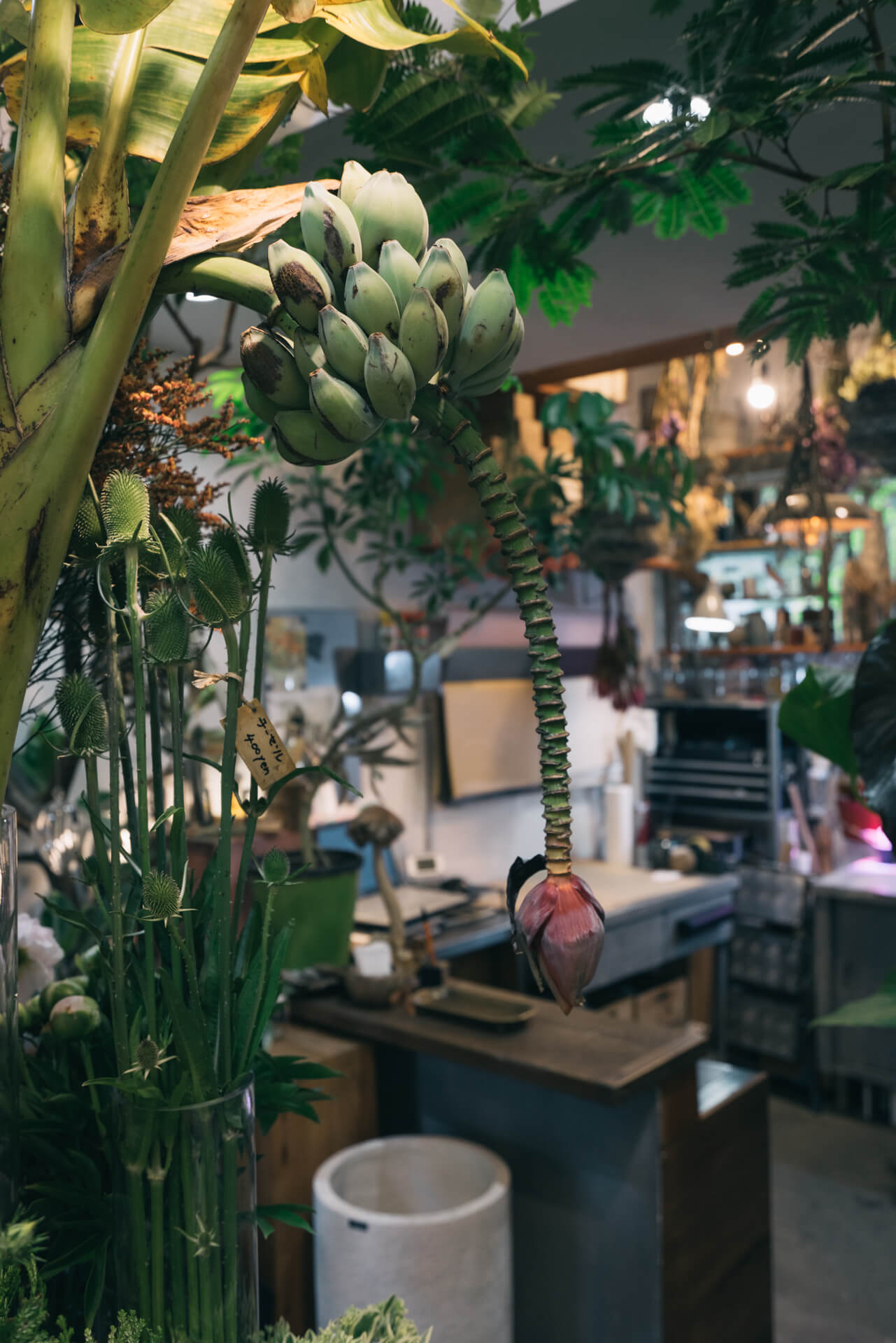 びっくりしたのは、冒頭の写真にも写っている、バナナの木!こんな風に蕾をつけるんだな……!
