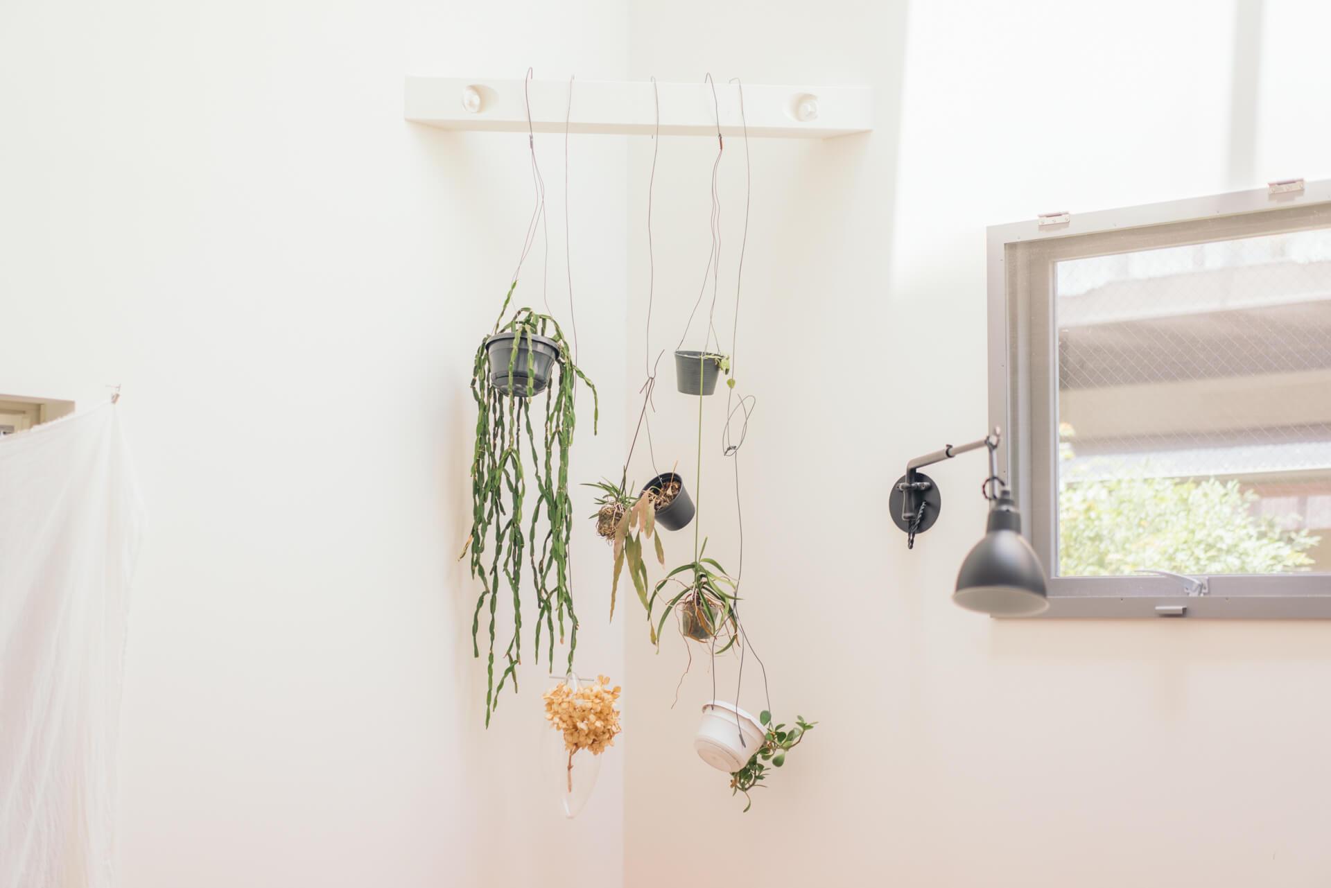 いろいろな場所に、ラフな雰囲気で飾られている植物も素敵。