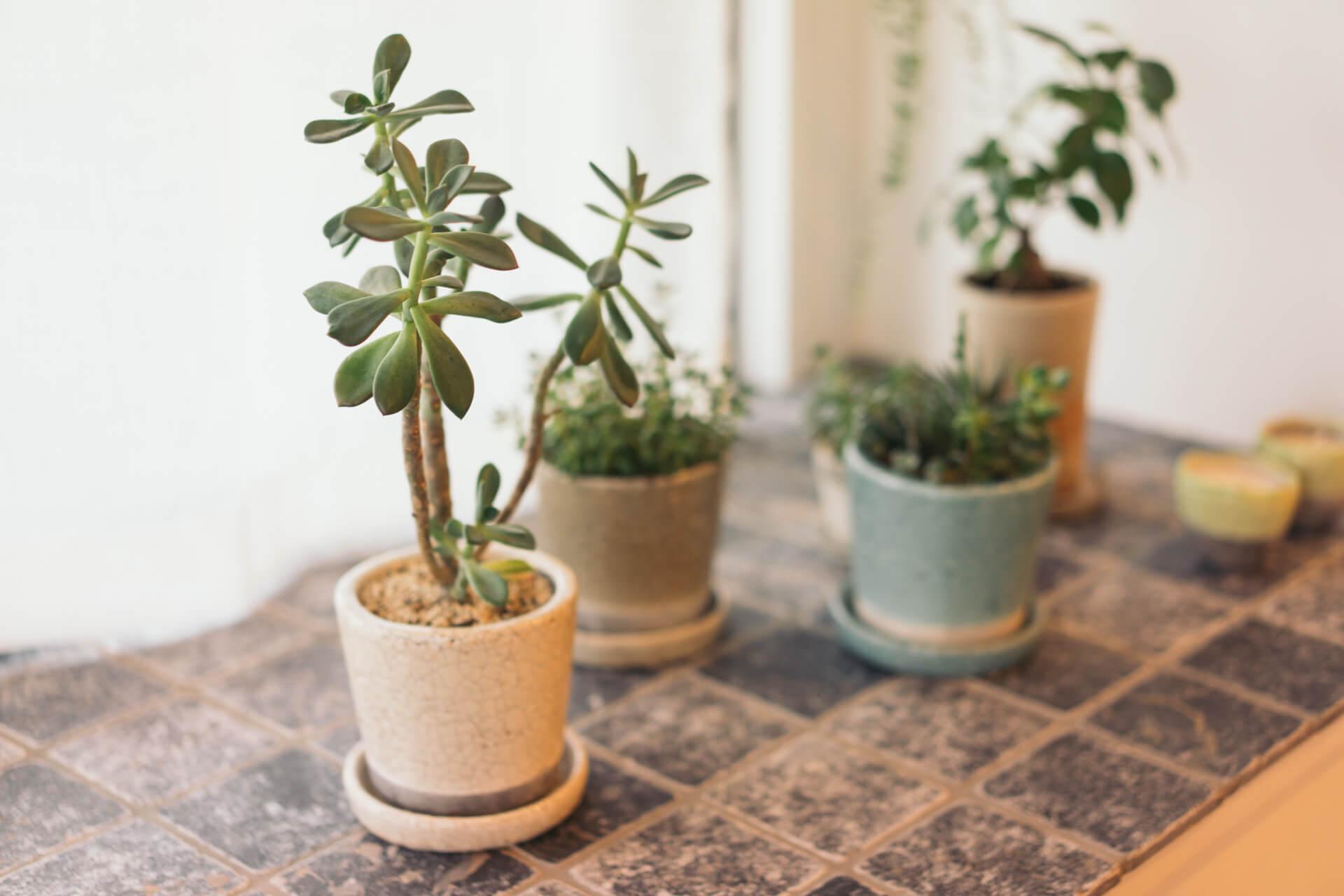 出窓のスペースにはタイルが敷かれ、素敵な鉢に植えられた植物がいっぱい。