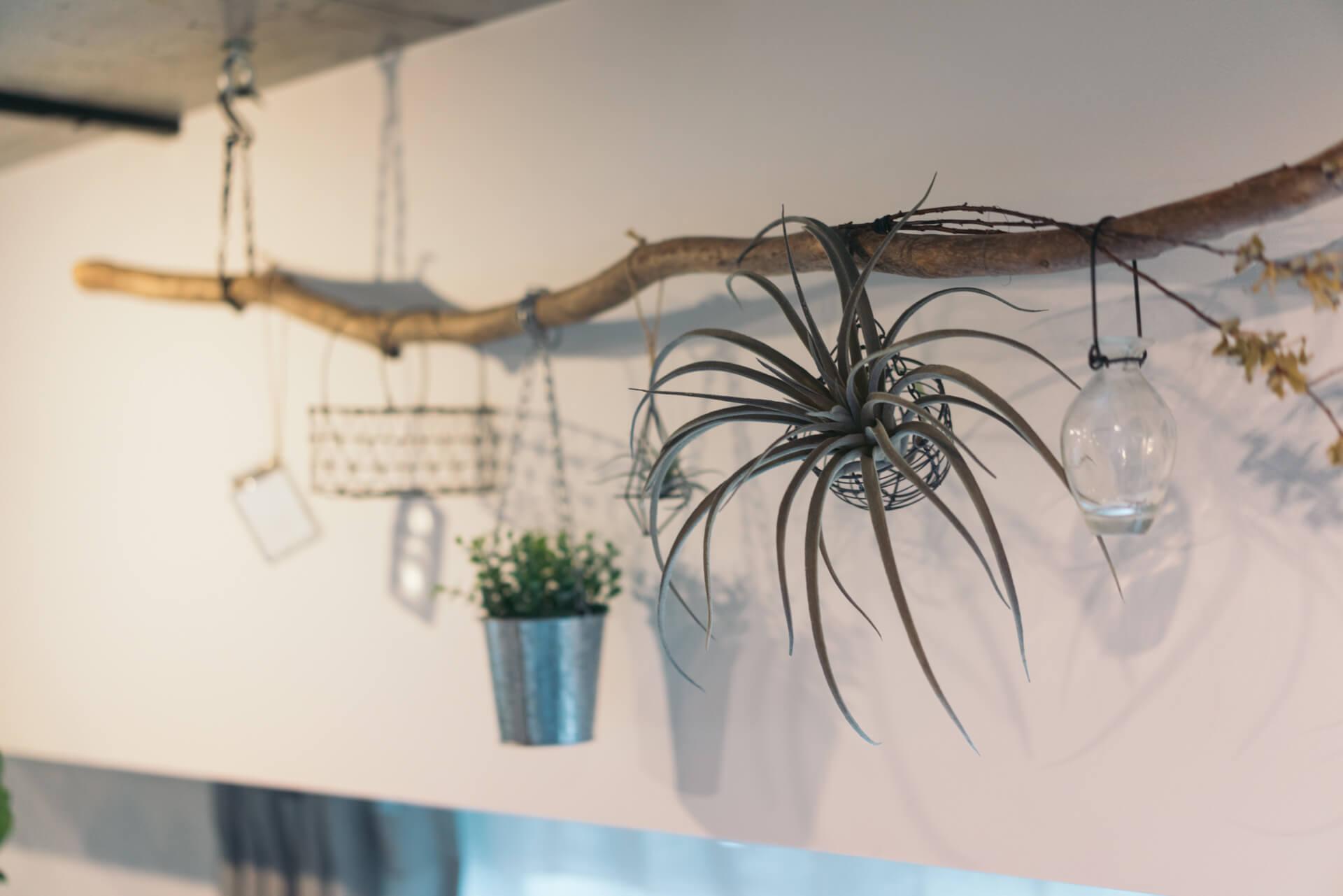 天井から吊るされているのは流木。さりげなく小さな植物たちが飾られています。