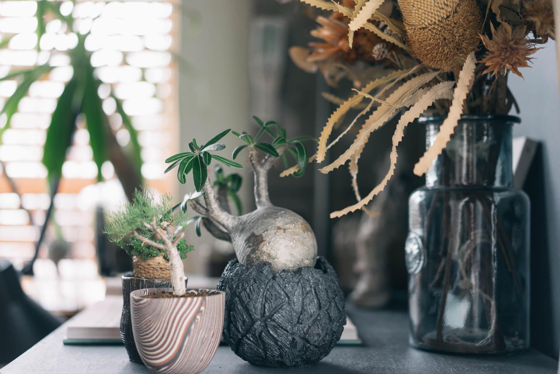 塊根植物など、ちょっと珍しい種類のものもたくさんありました。あ、この鉢は、goodroom journal でも以前紹介した「TOKY(https://www.goodrooms.jp/journal/?p=17092)」さんのものですね。
