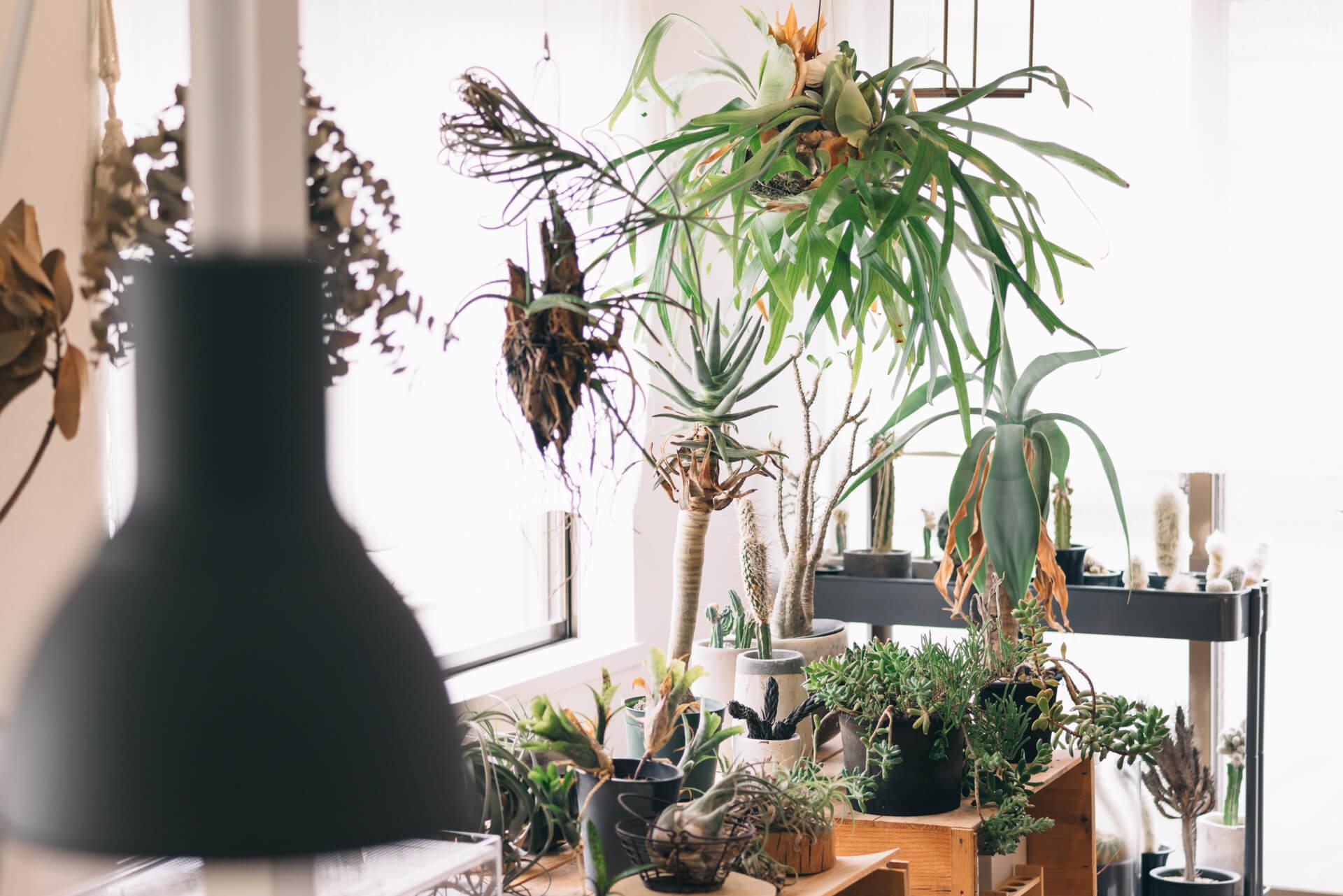植物に毎日霧吹きで水をあげるだけでも、湿度はかなりコントロールできますよ(このお部屋はこちら)