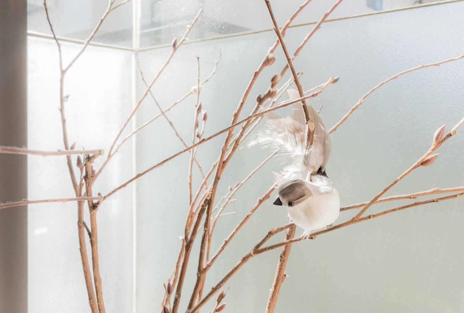 小鳥が好きだというだんなさん。冷蔵庫の上や出窓などにかわいらしくいらっしゃる。「恐竜は鳥の祖先ですよ!」と恐竜の一軍昇格の後押しをしておきました。今後の林家の棚の動向に注目。
