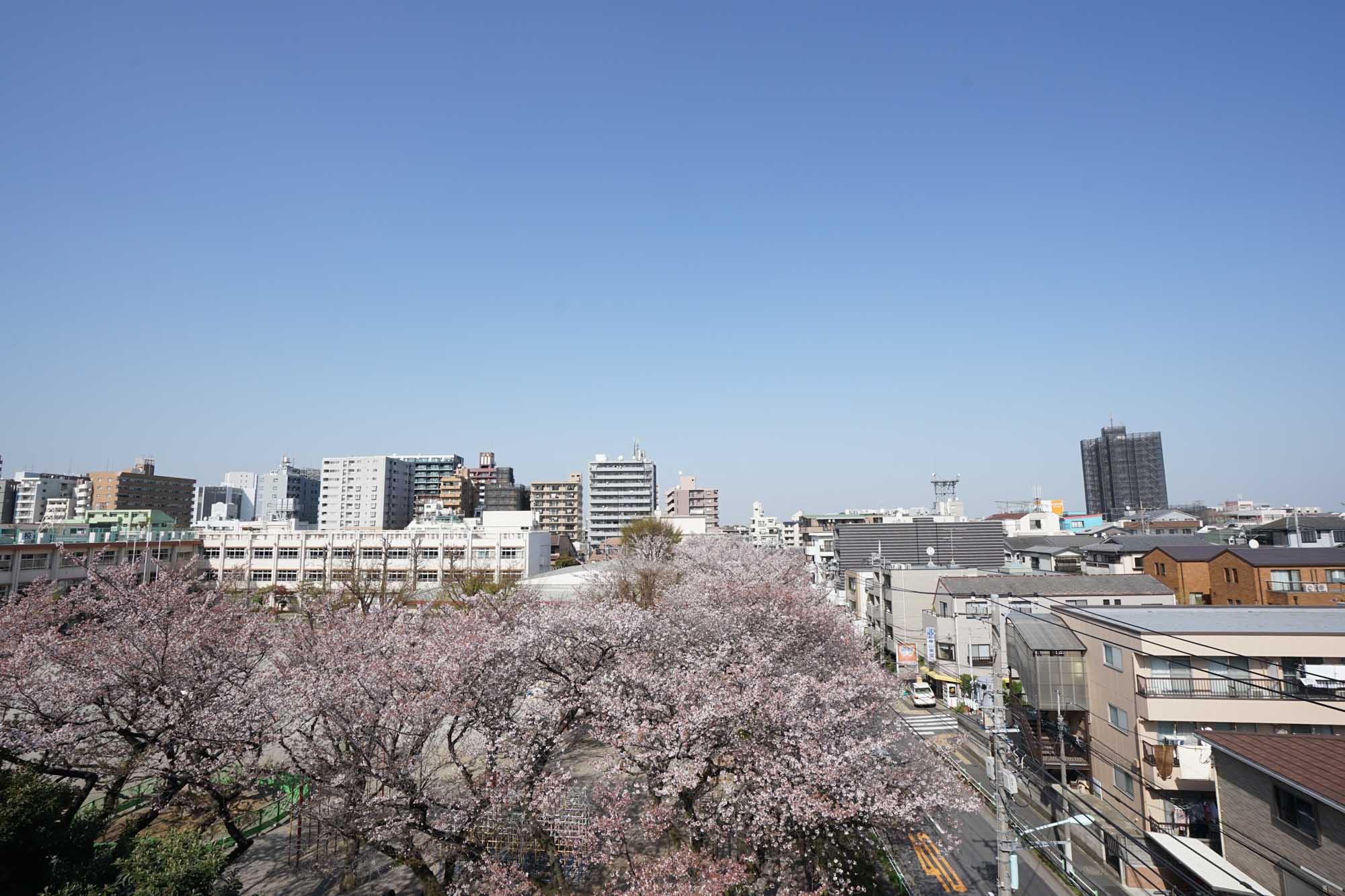 「はじめての常備菜レッスン」、開催日は桜が満開のお花見日和でした。