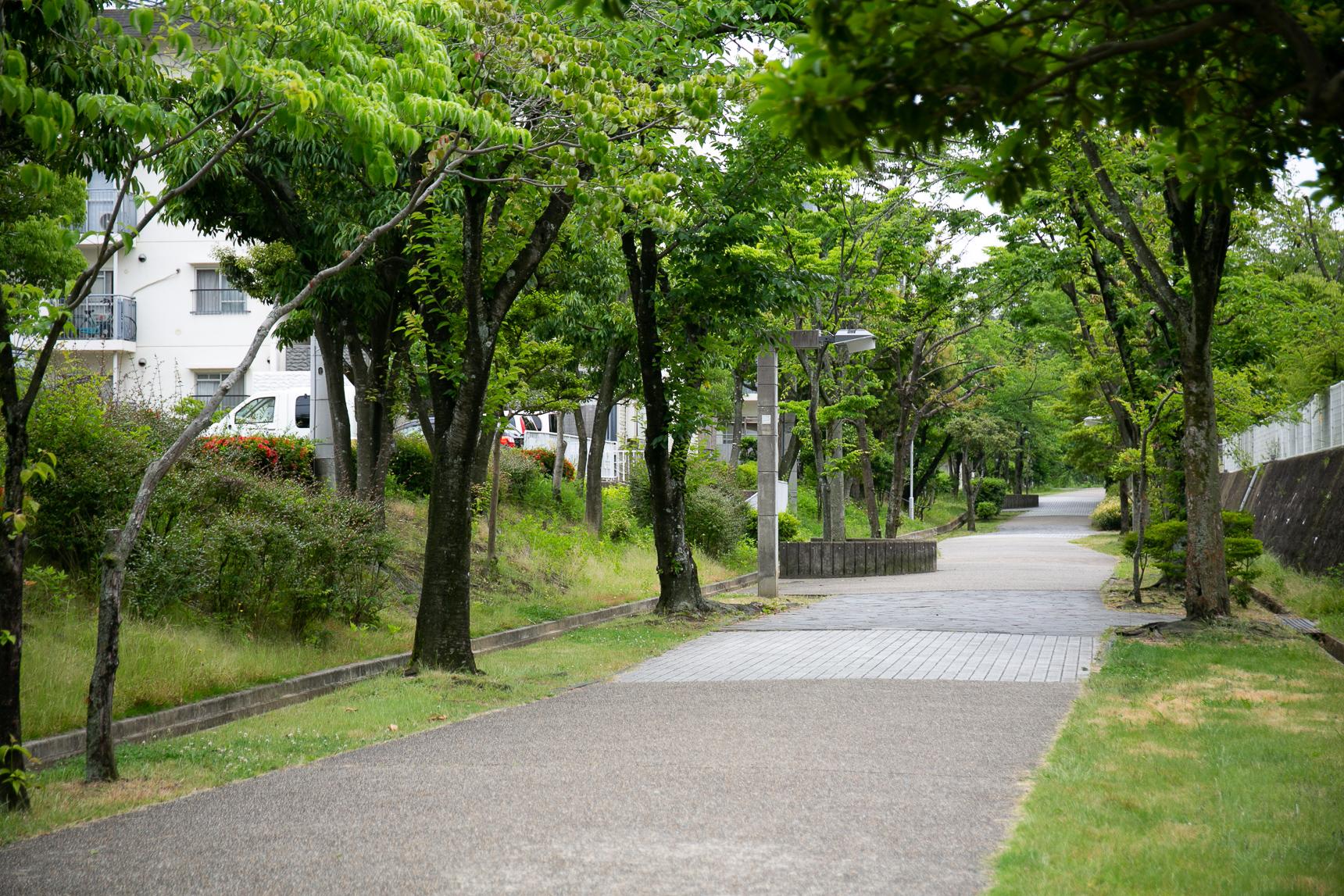 バス停からは、緑道を通っていきます。車通りがないのでのんびり歩けます。