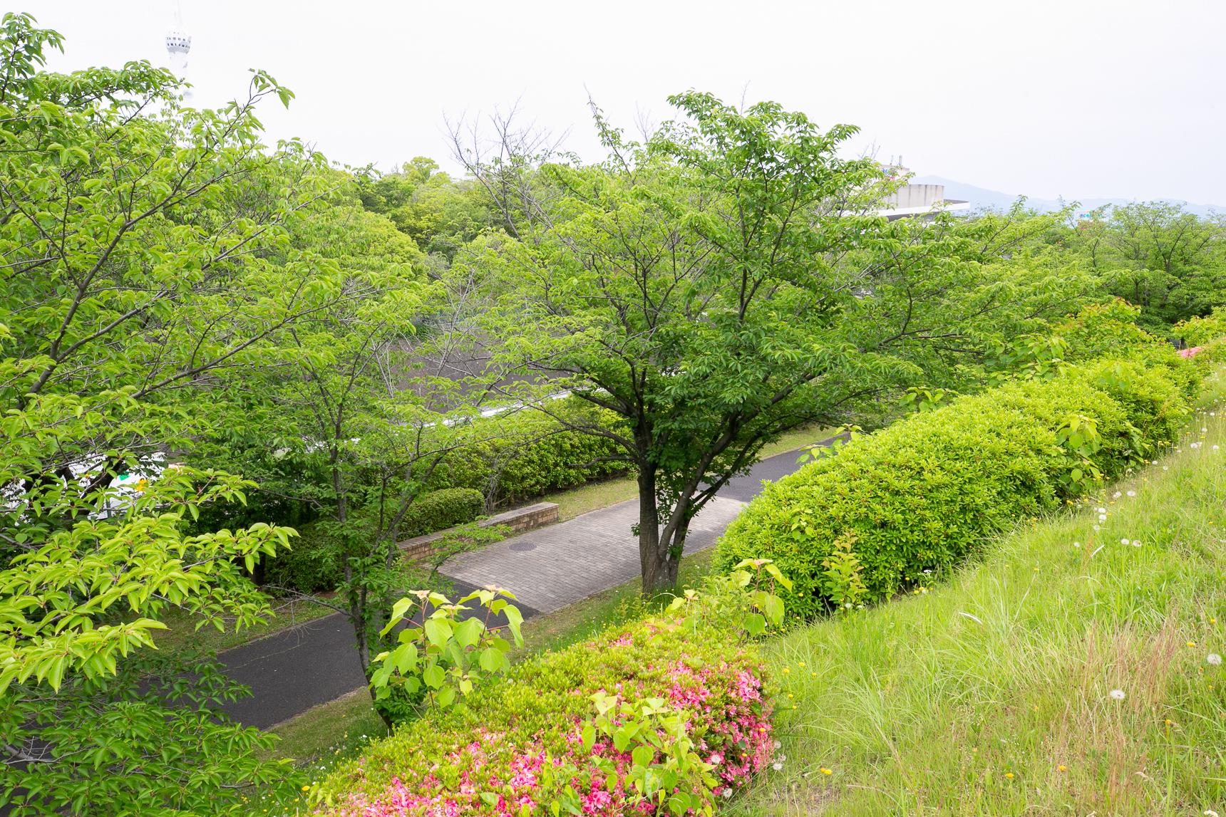 藤沢台第3団地の周囲には、緑豊かなウォーキングコースも豊富。ここは桜並木ということで、春になるのが楽しみ。