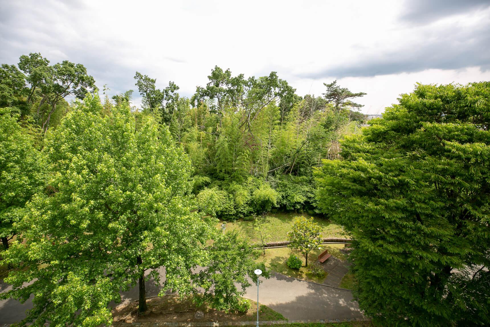 こちらは、団地の5階からの風景。周りを竹林に囲まれている様子がよくわかります。お部屋にいながらにして森林浴ができてしまうような環境ですね