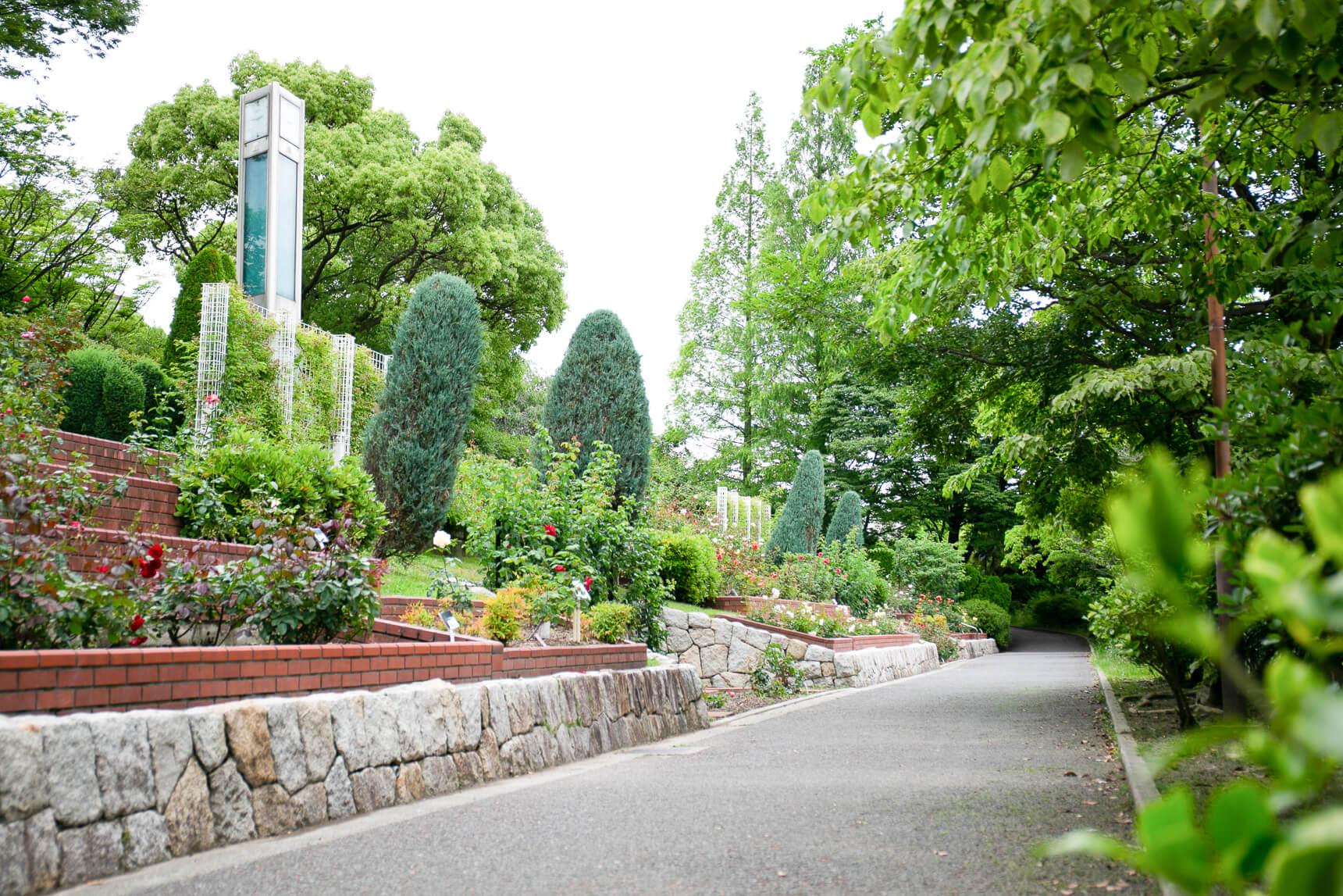 豊中市の市花であるバラが60種類以上も育つバラ園に、大きな芝生の広場があり、小さなお子さんとのお散歩や、ピクニックにも良さそう