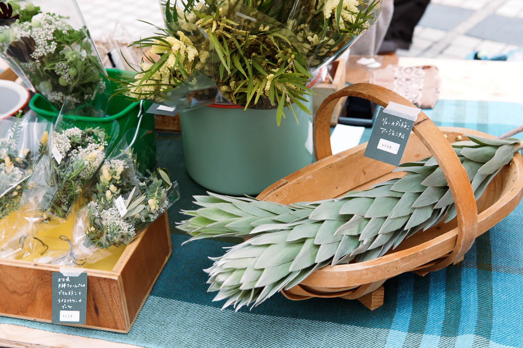 植物と共生する在り方を問うマーケット「Flower & Green Market」(東京・表参道)