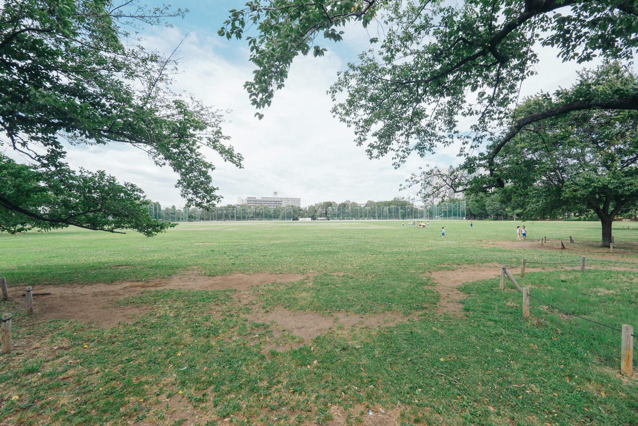今回ご紹介する武蔵野緑町パークタウンから徒歩圏内の大きな公園、武蔵野中央公園。思いっきり走り回れる広々の芝生の広場が圧巻です。