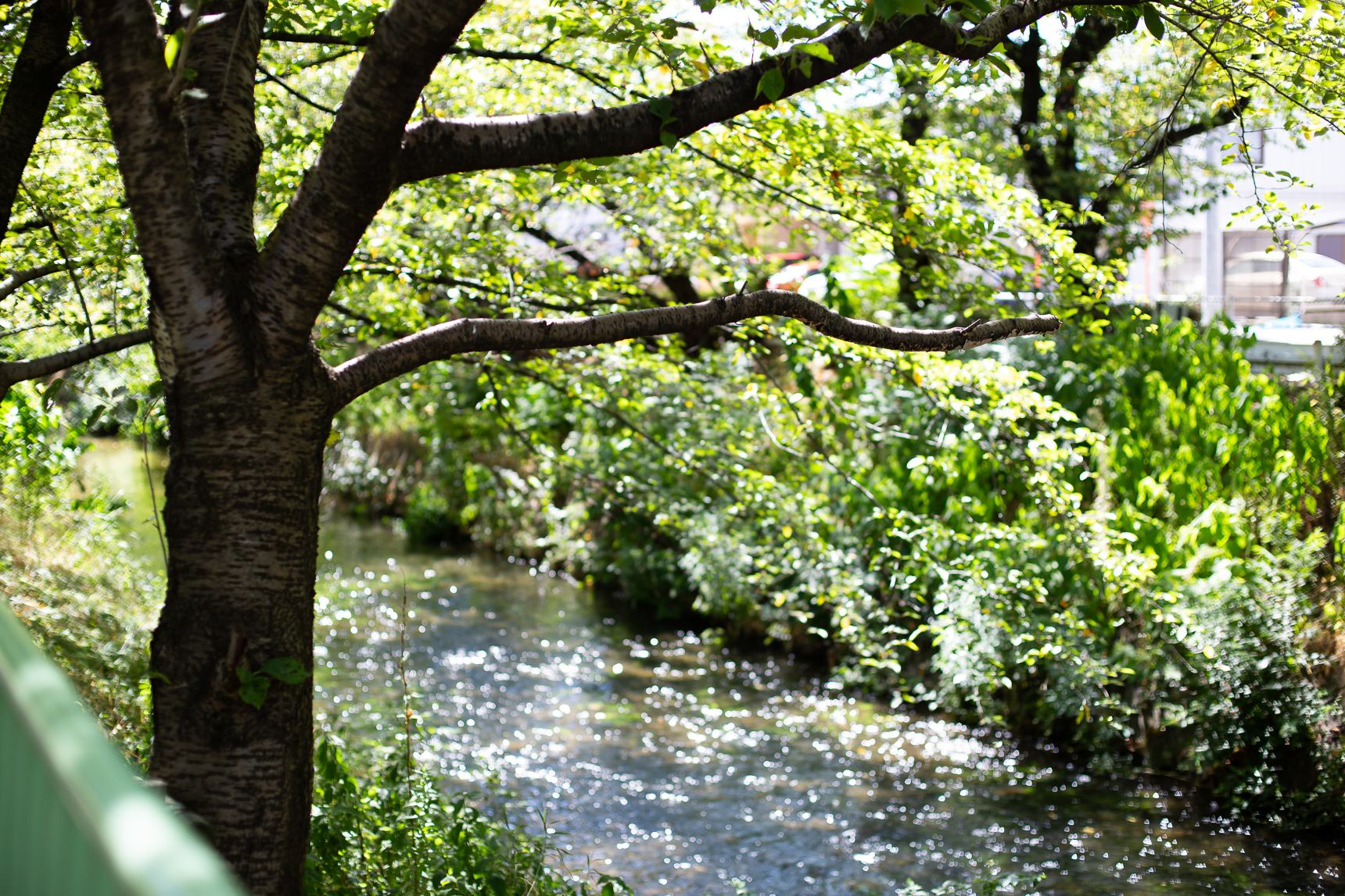 団地のすぐ裏手を流れる黒川。川沿いの緑道は、春になると桜が見事です。