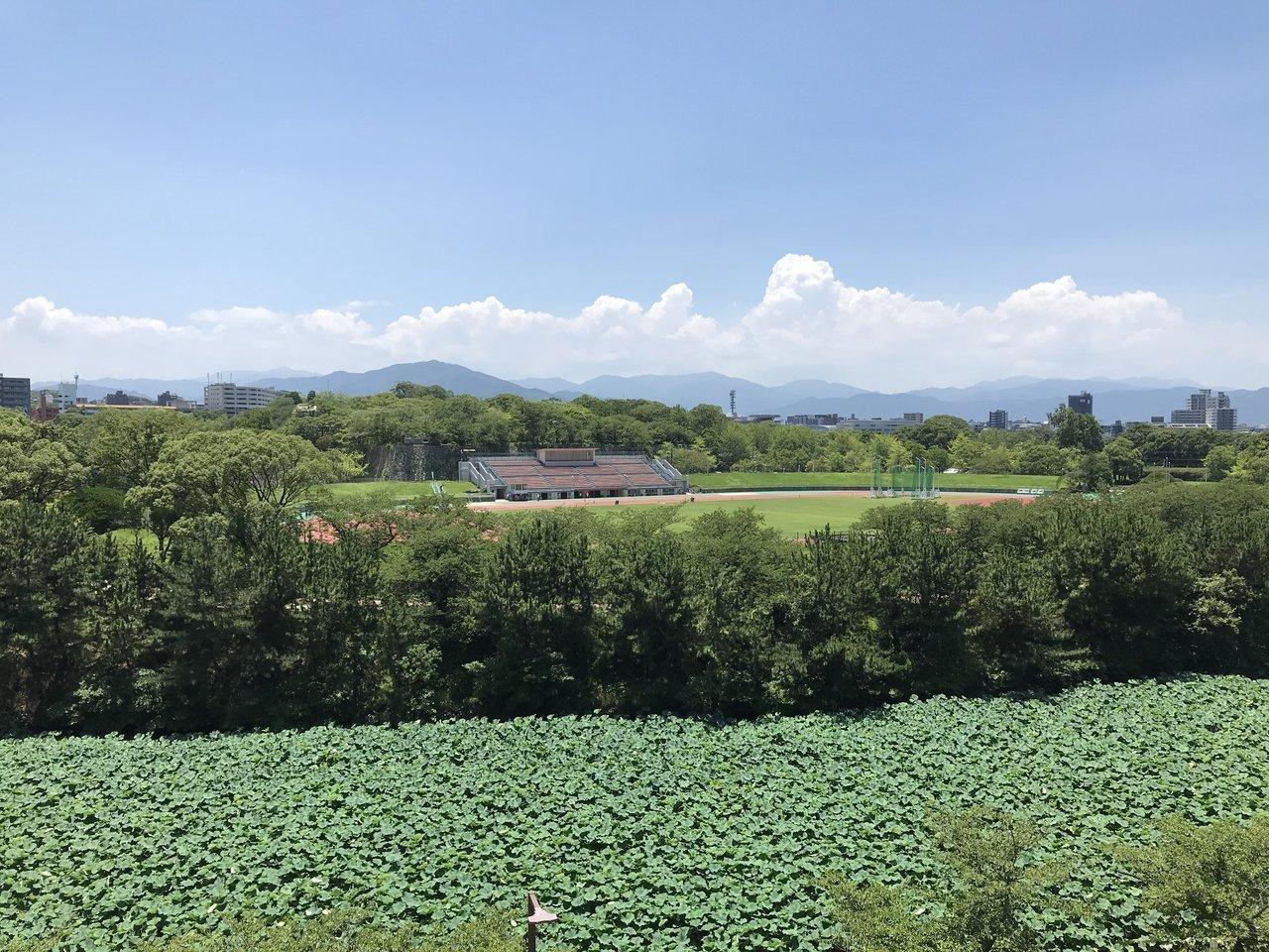 窓からはこの眺望!一面の緑に思わず深呼吸したくなります